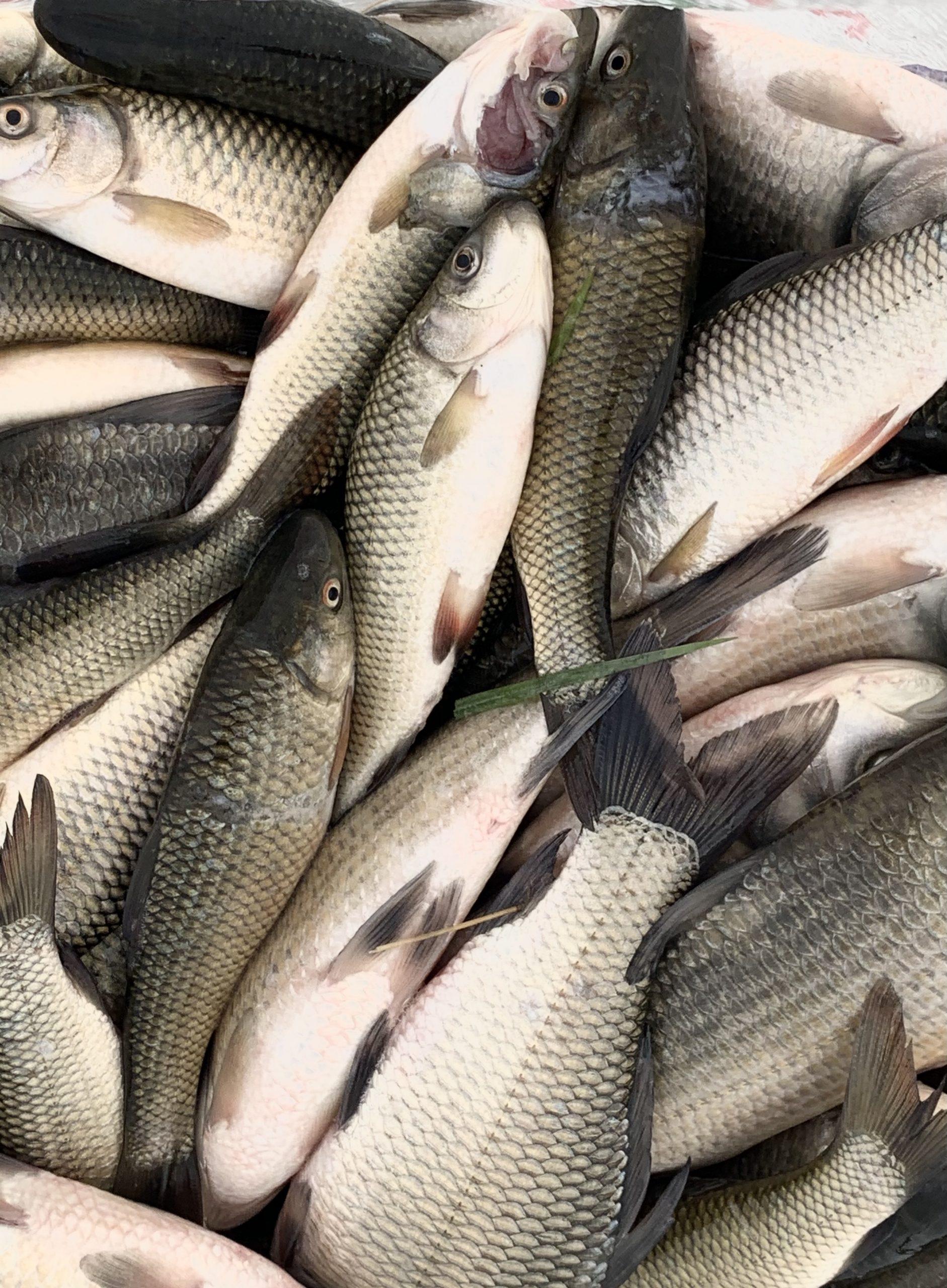 Various Fresh Fish on Focus