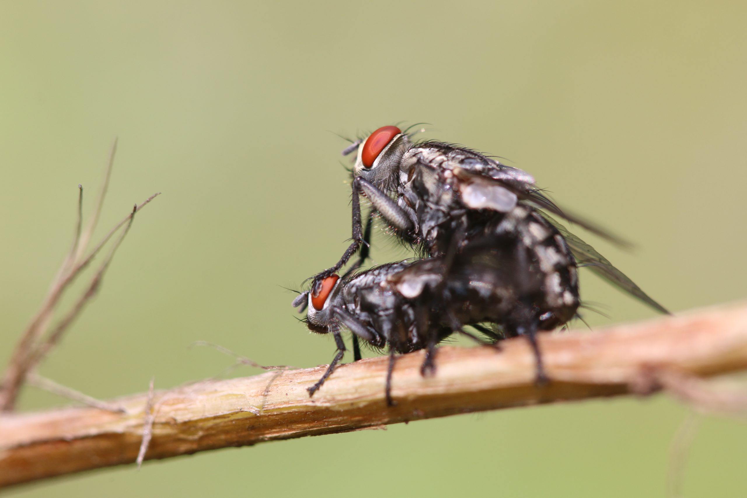 Flies on a plant