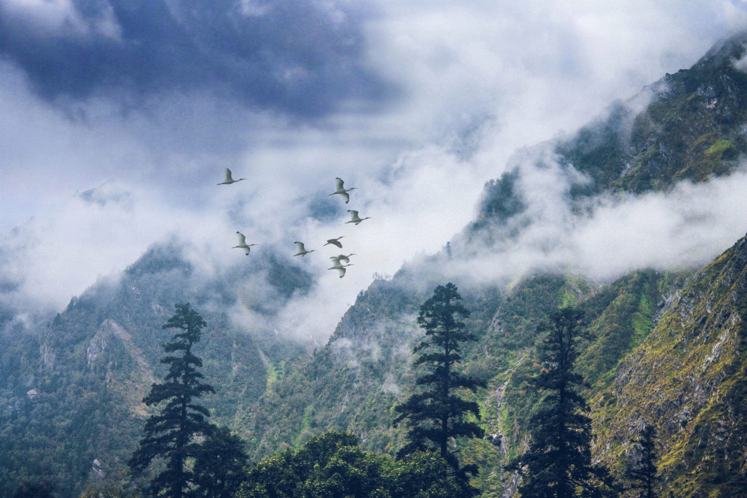 Flock of birds passing through the fog.