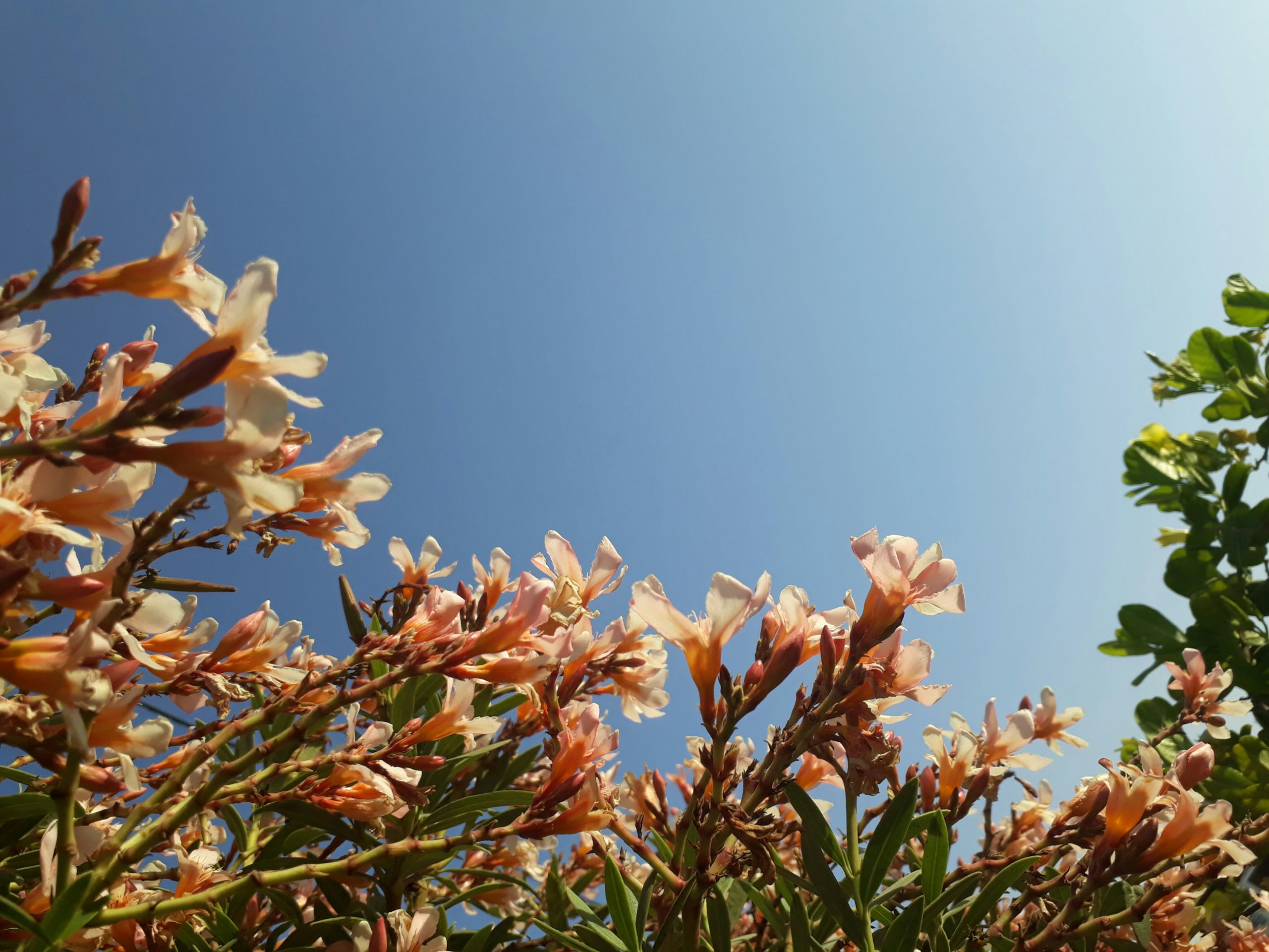 Flower During Daytime