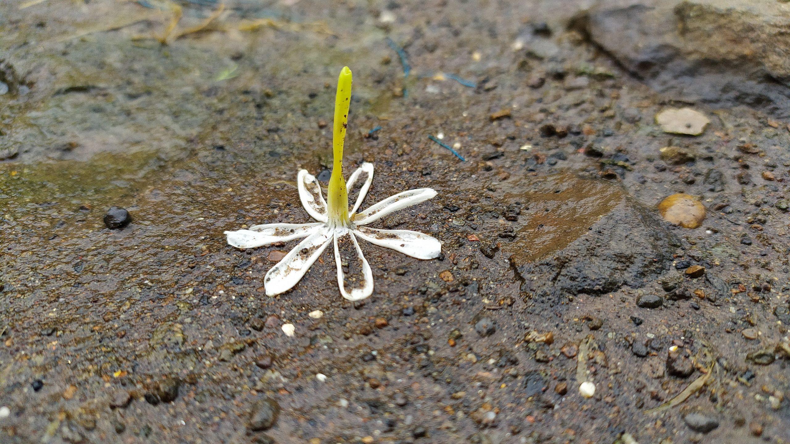 Flower in Wet Sand on Focus