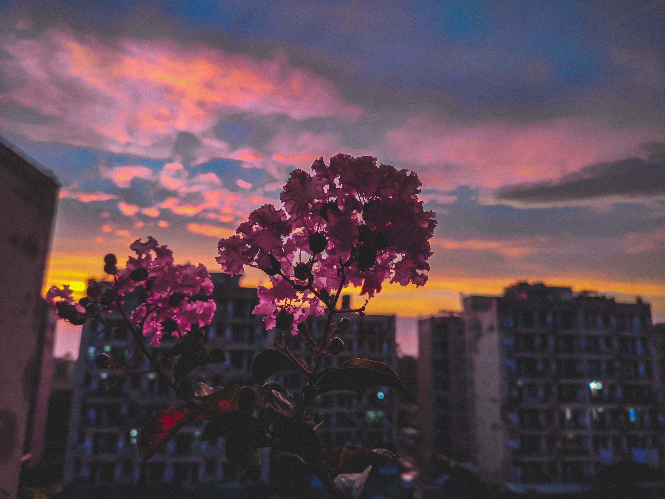 Flower pot and evening