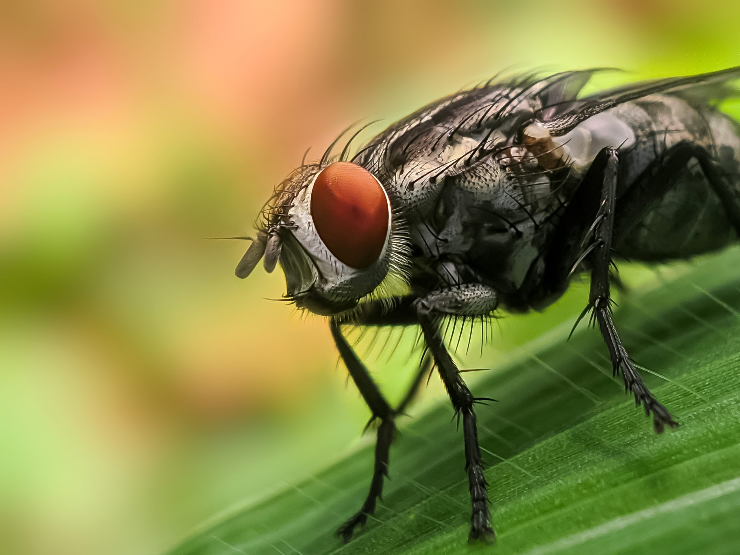 A housefly sitting on a plant
