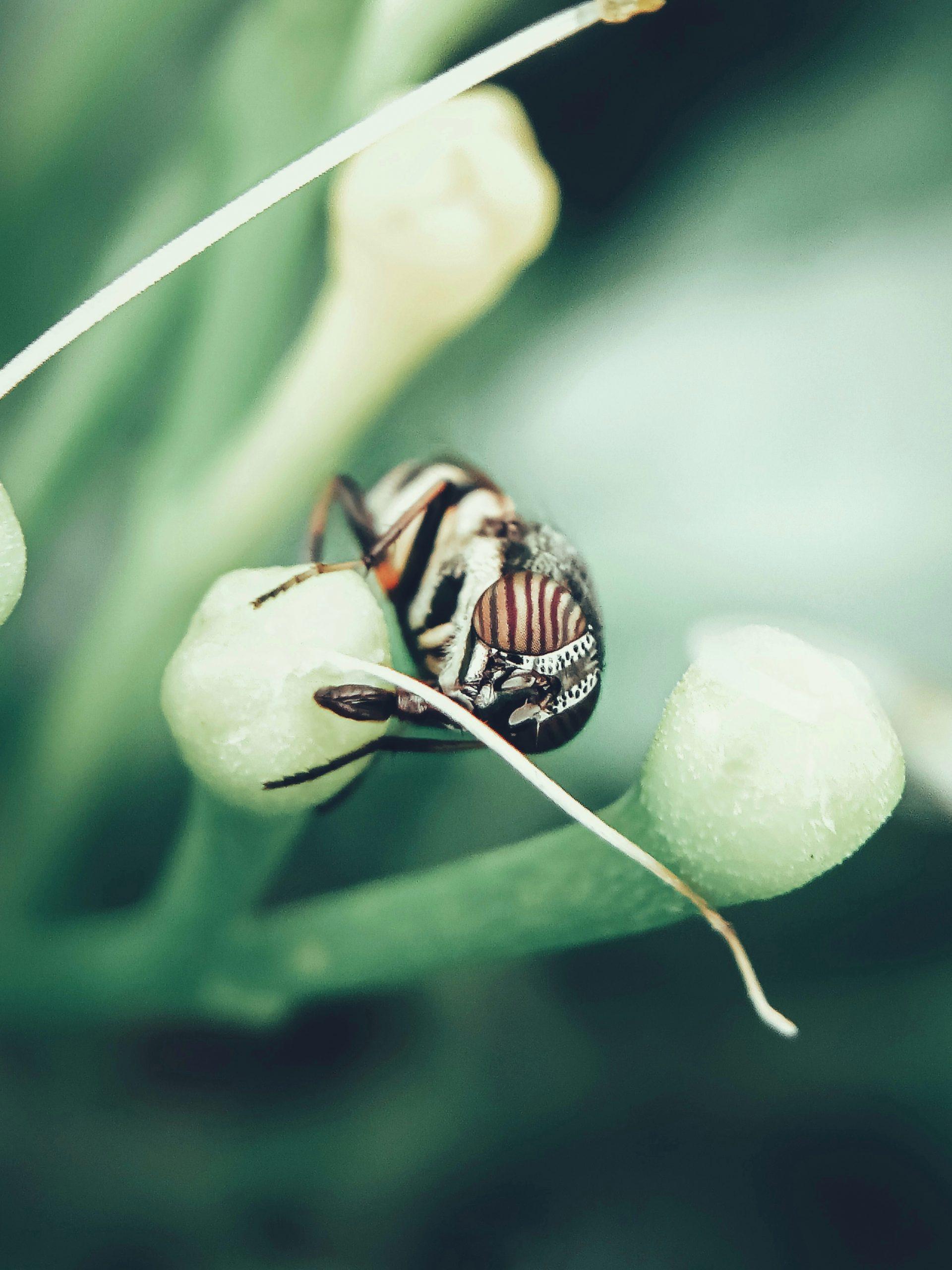 Fly closeup shot