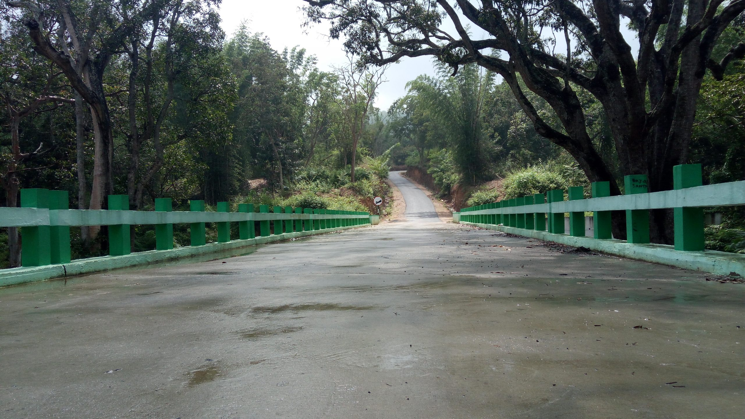 Forest Bridge and Trail