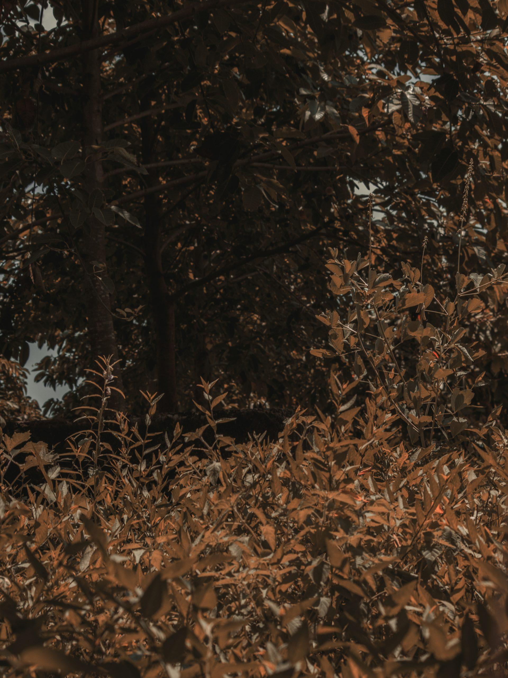 Forest Gradient