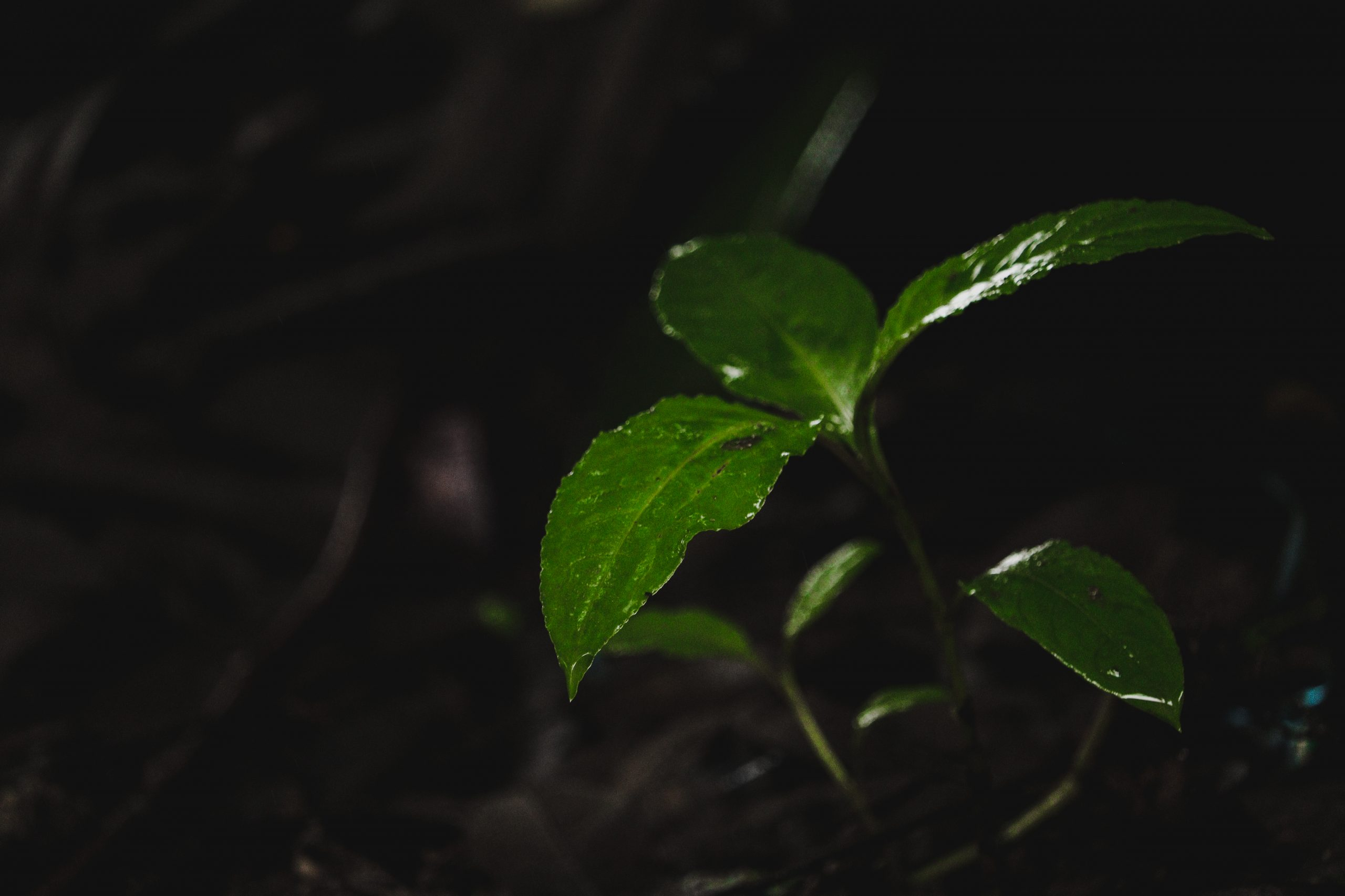 a plant with fresh leaves