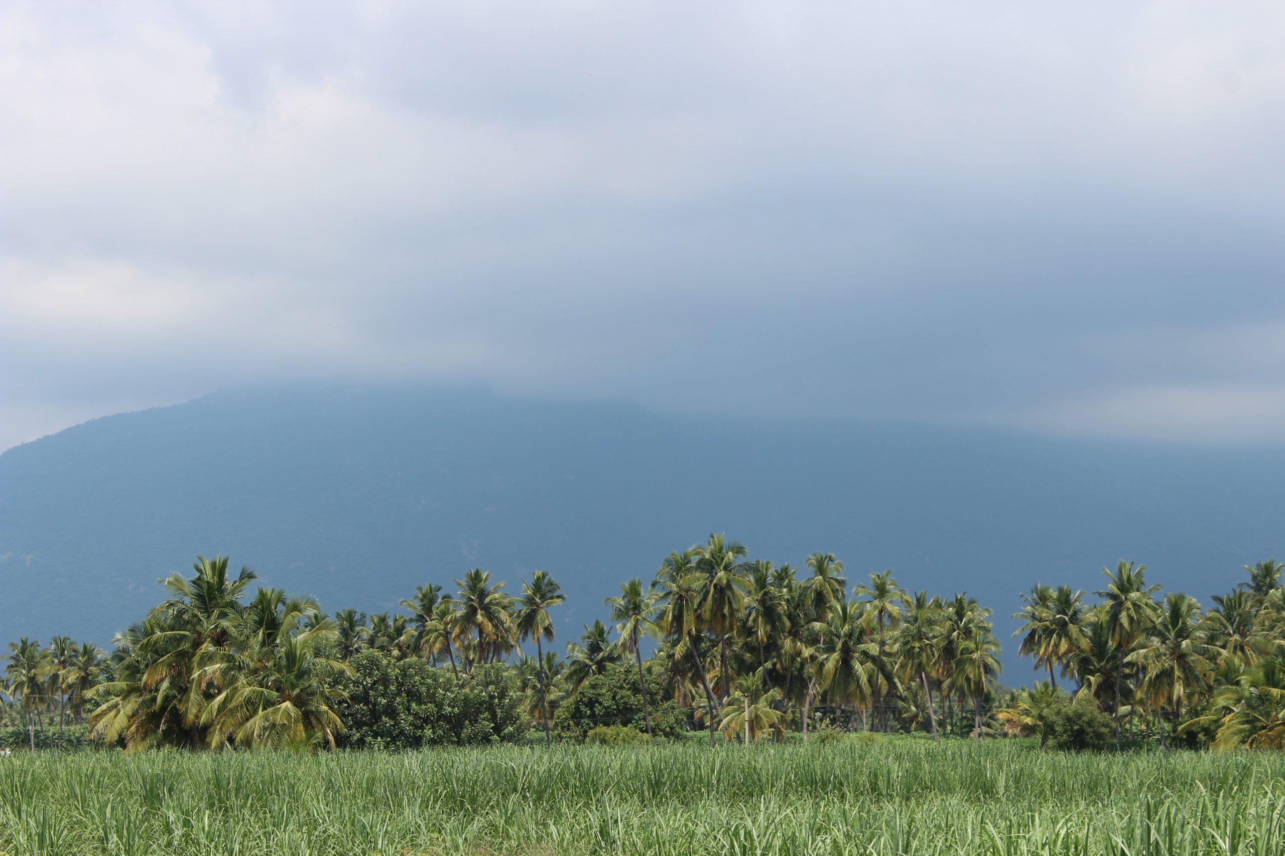 Grassland and Trees