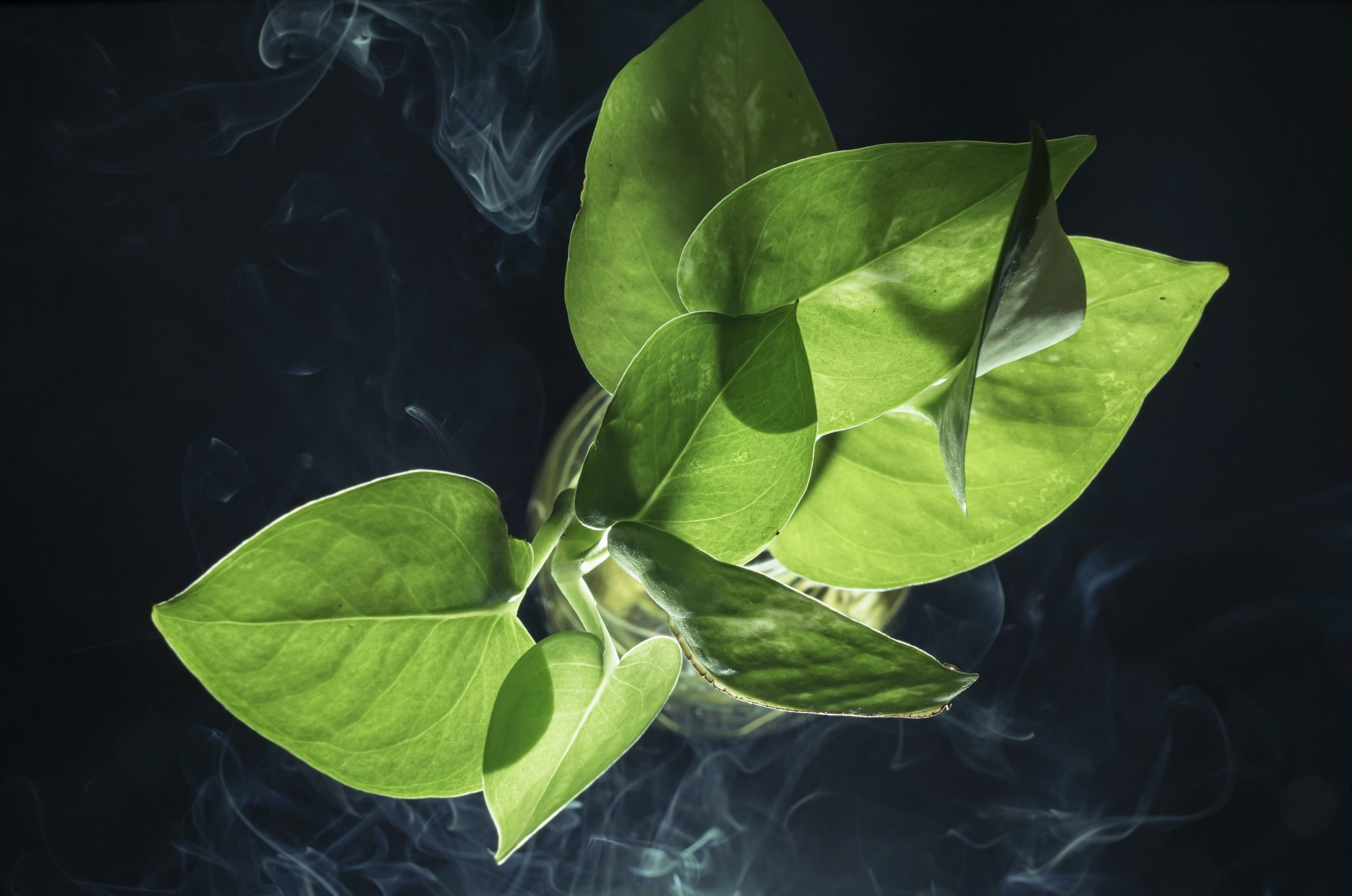 Green Plant on a dark background