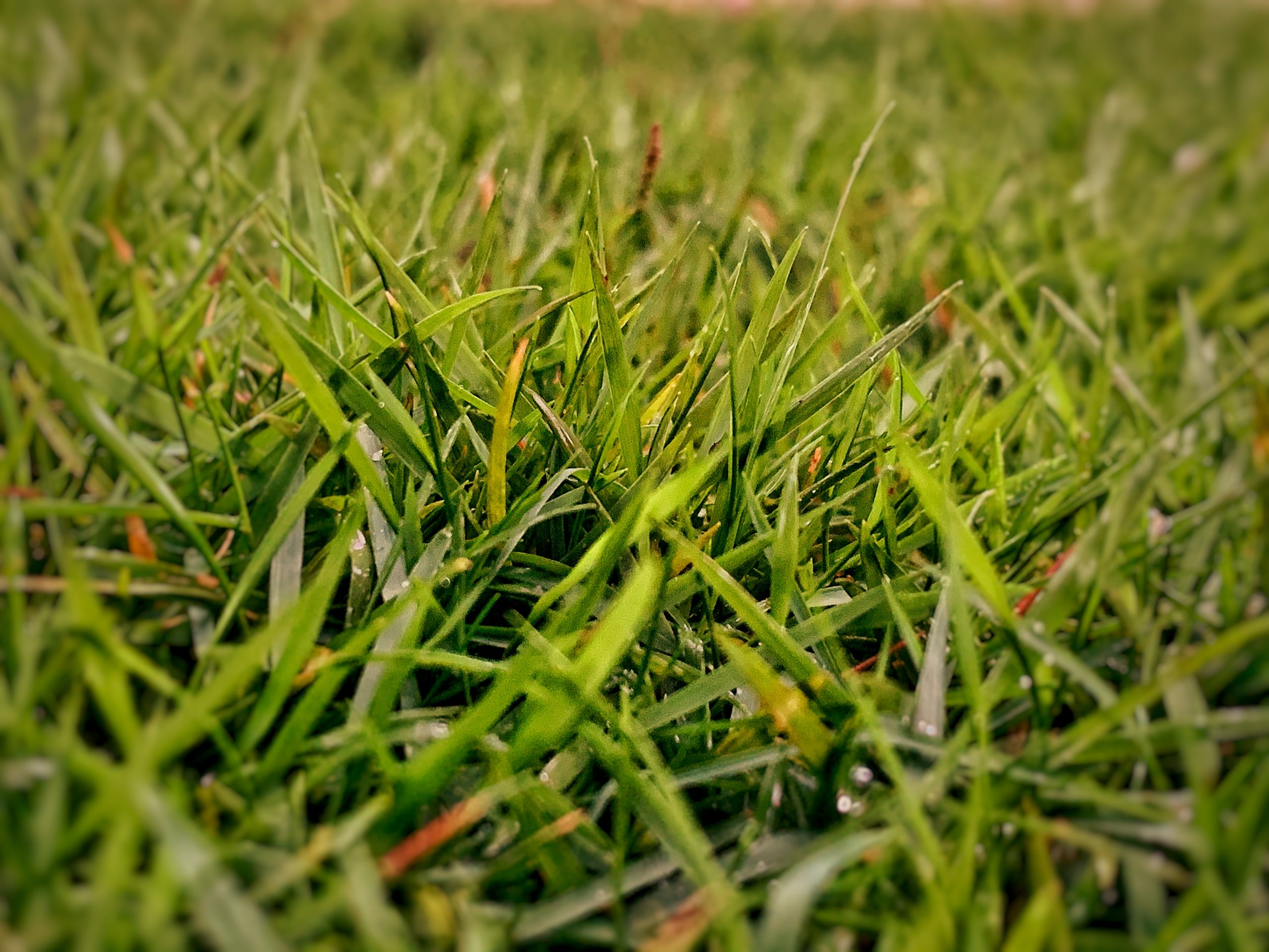 Green grass with dewdrops