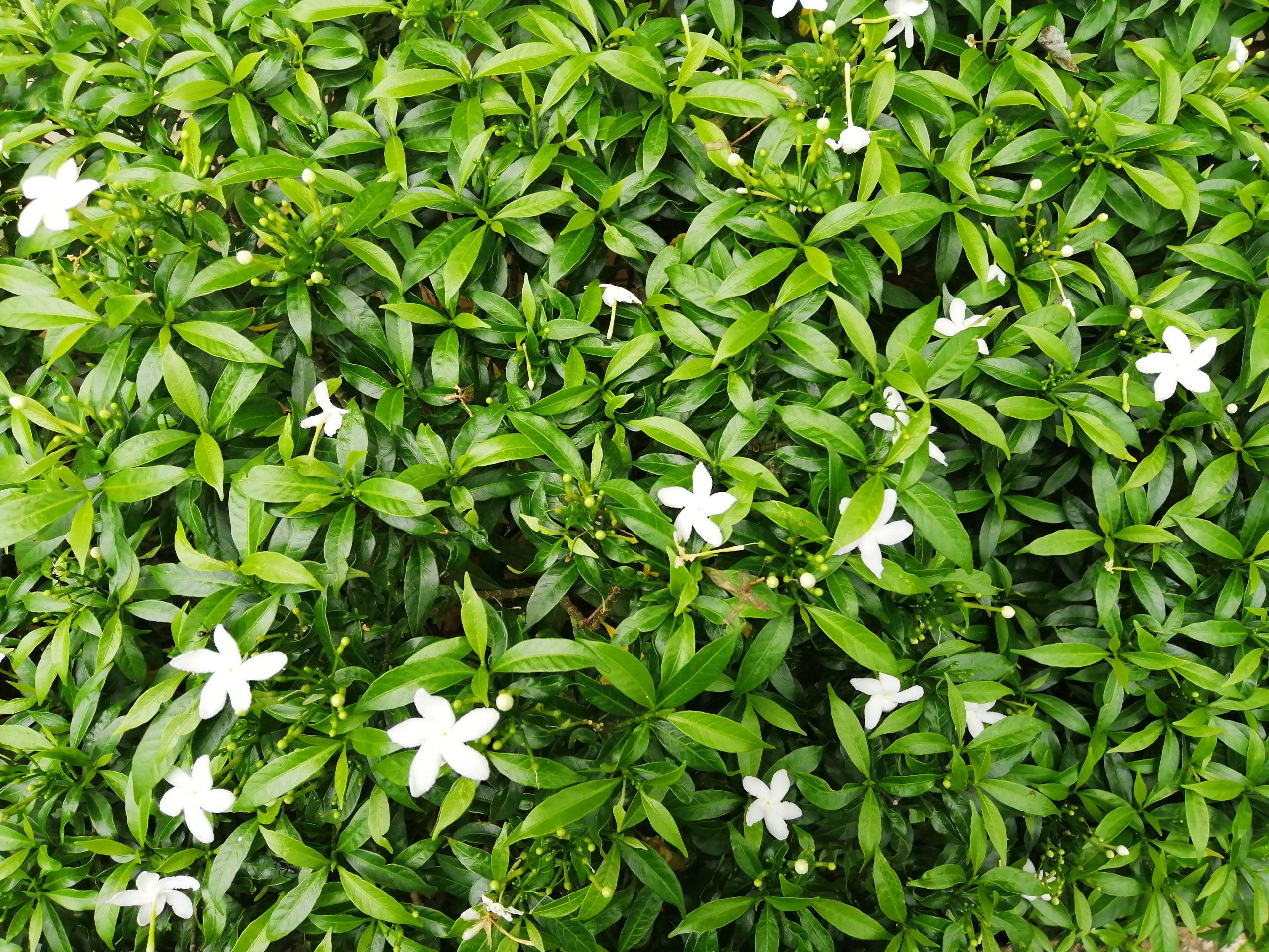 Green shrub natural background