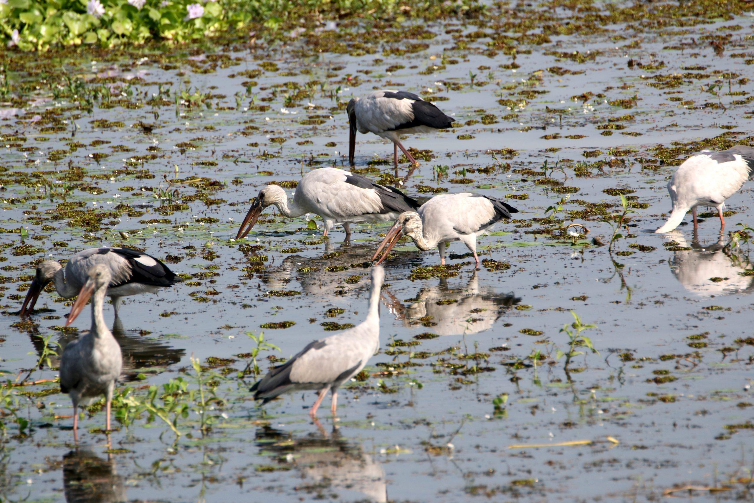 A flock of birds enjoying.