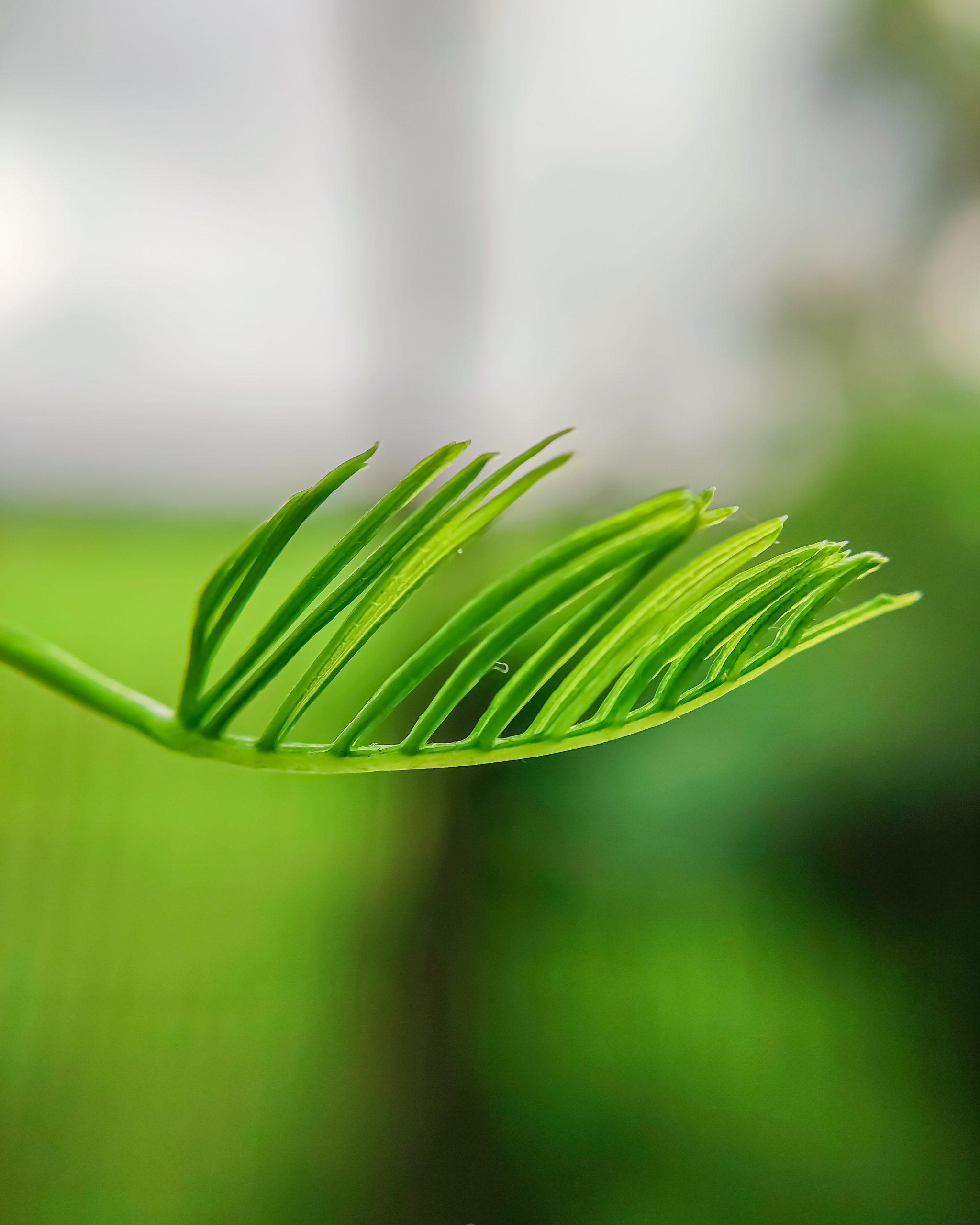 Growing Leaf