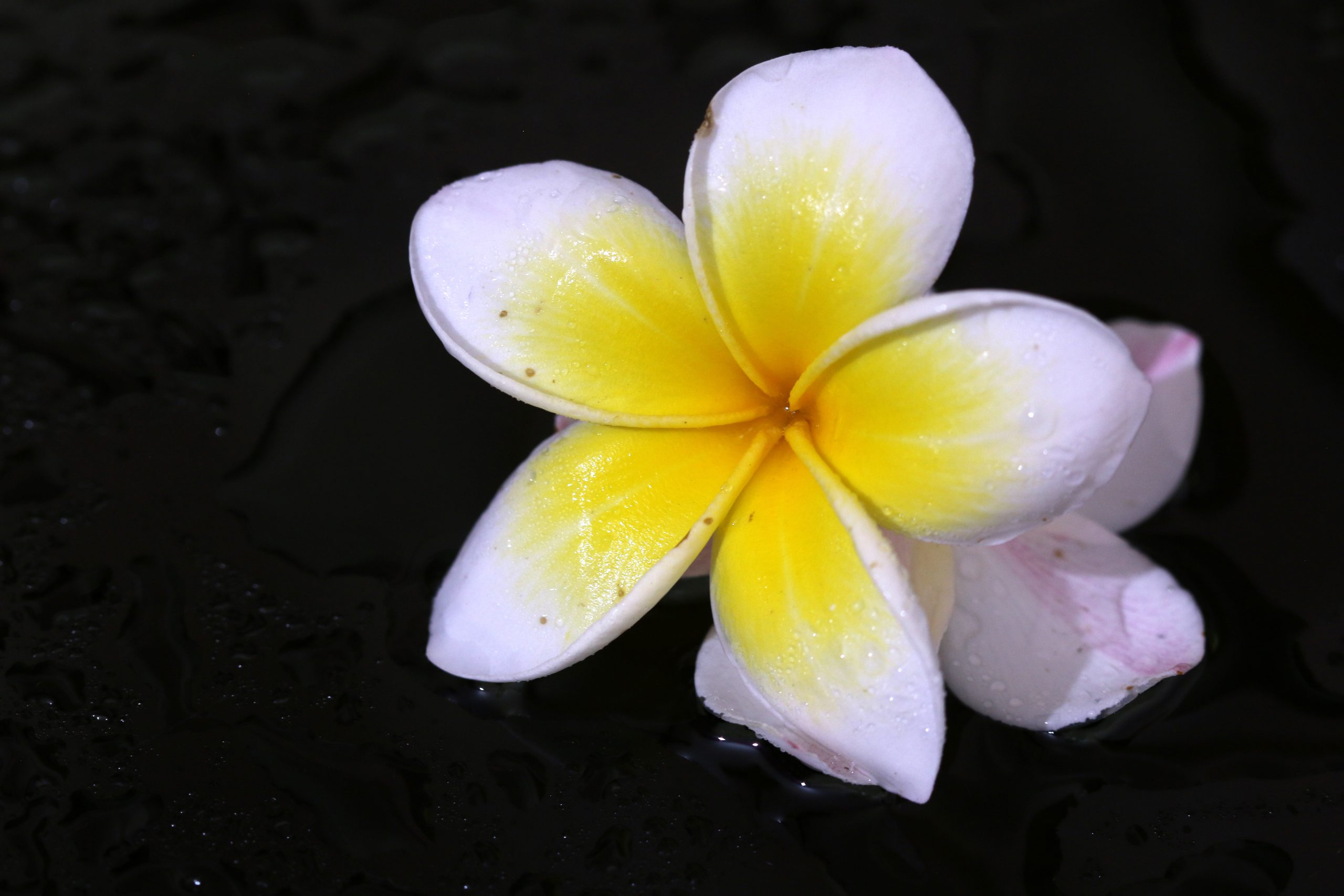 A white and yellow flower