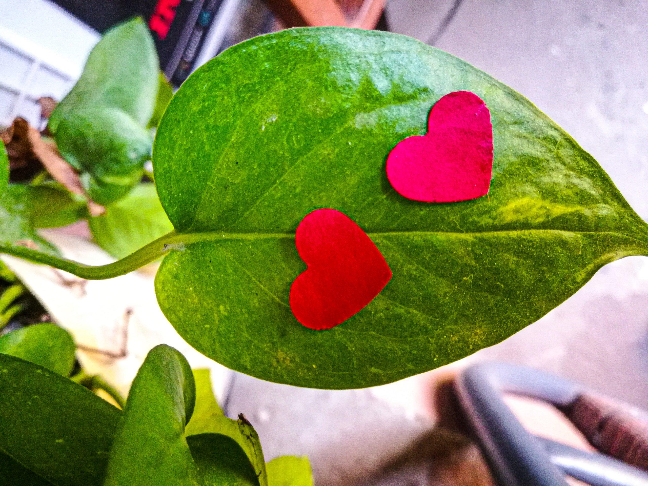 Hearts on Plants