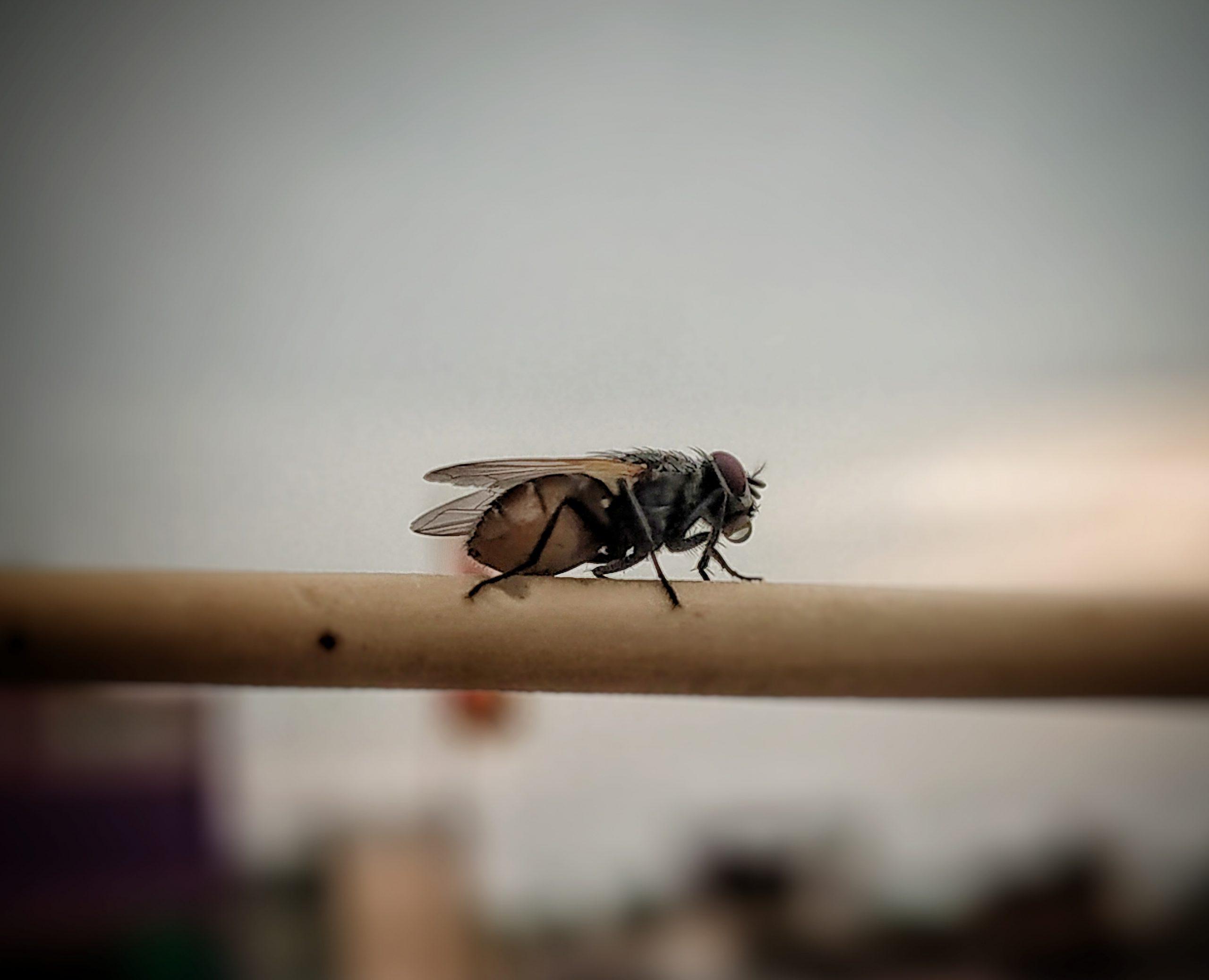 A housefly sitting on railing