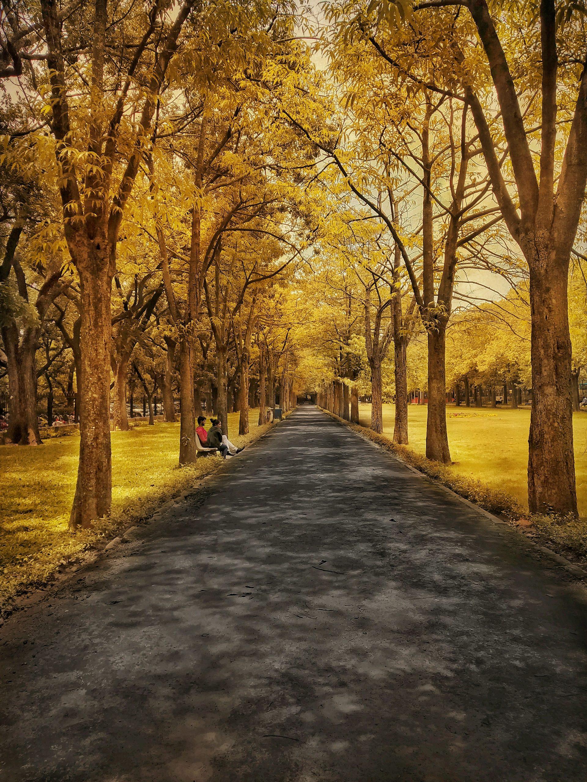 Cubbon Park Pathway