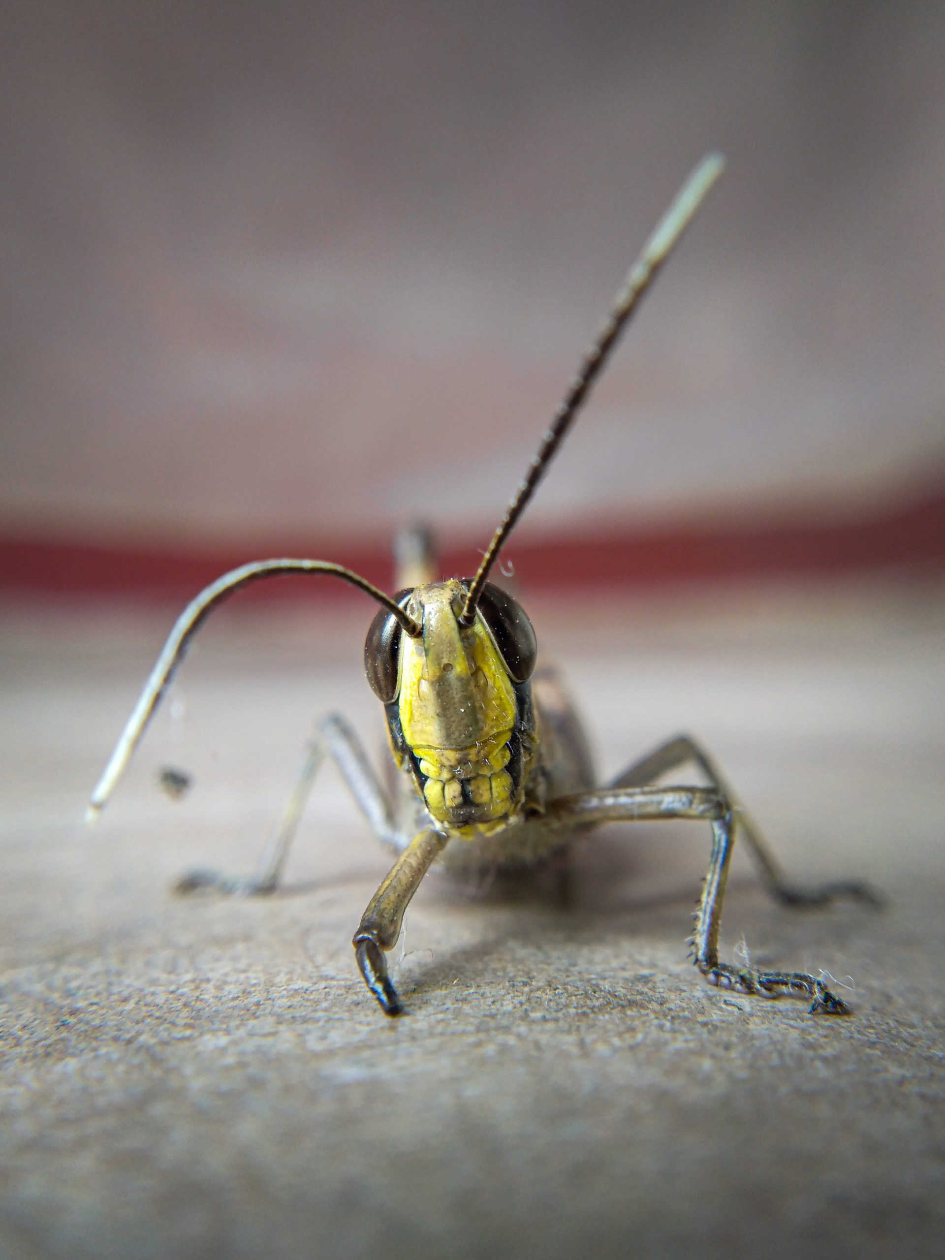 Injured Insect