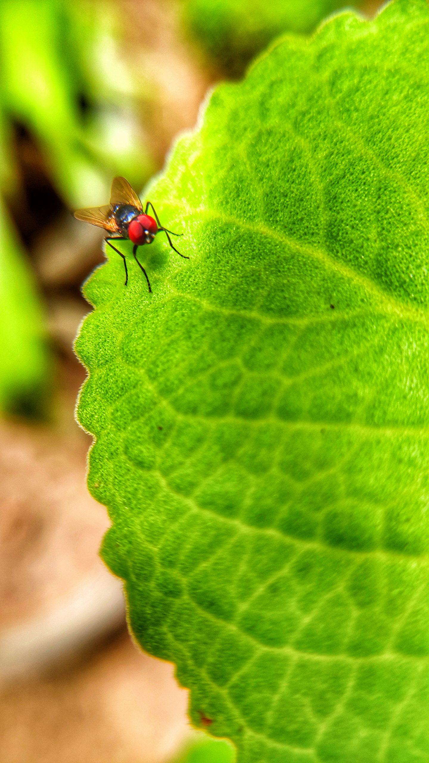 Fly on big leaf