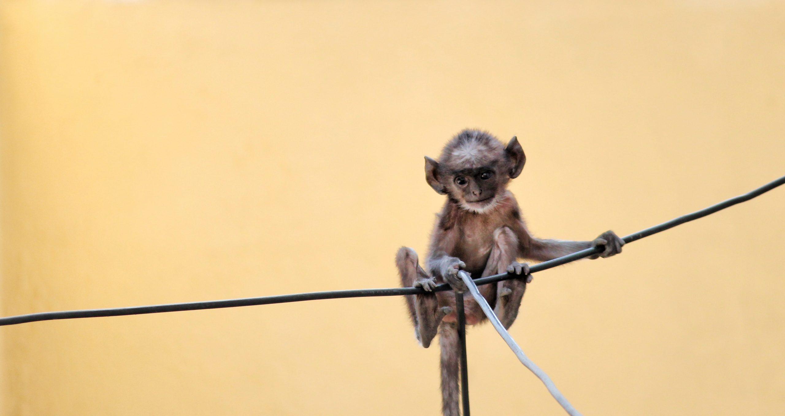 Joyful Baby Monkey