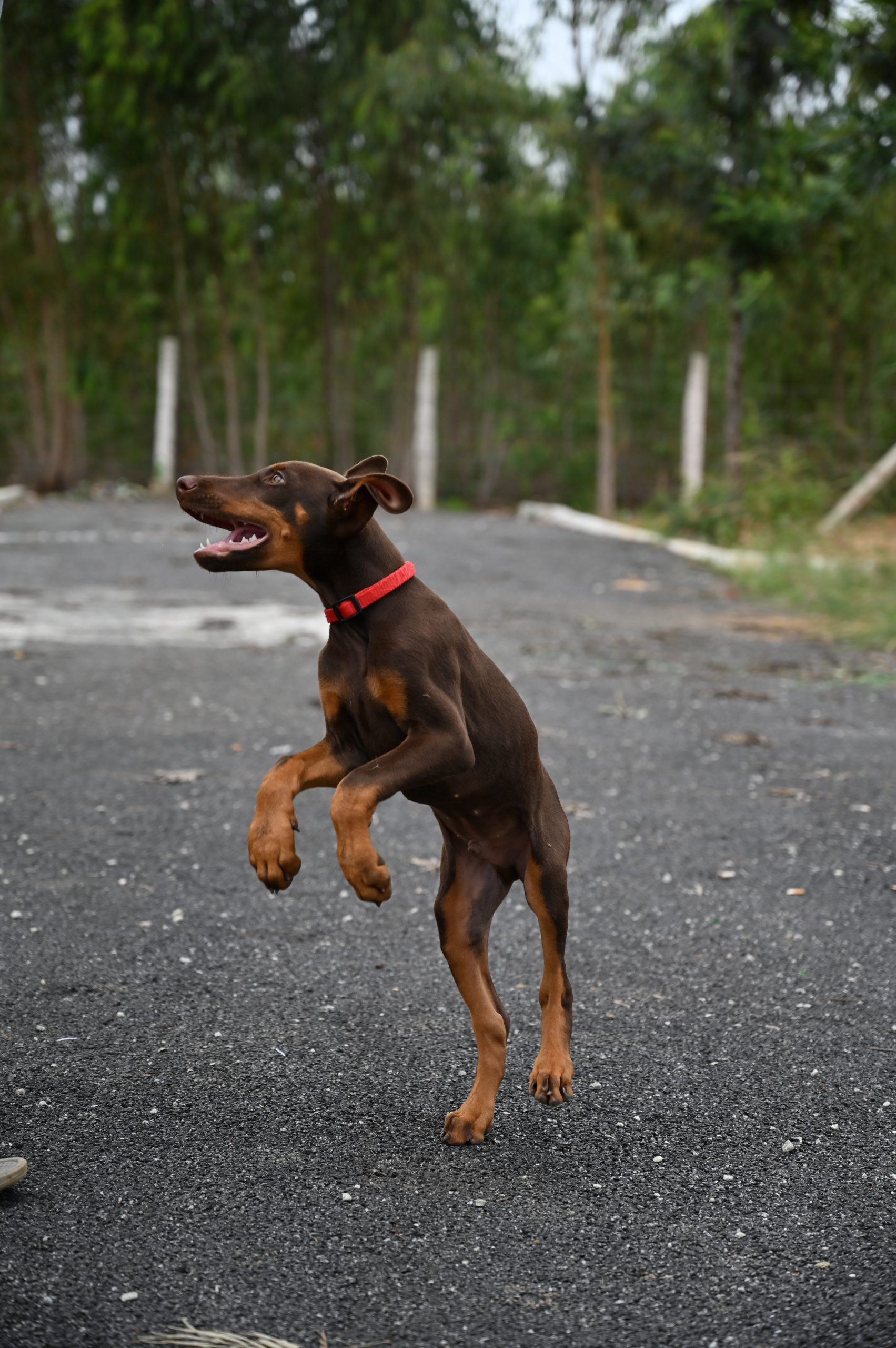 a dog playing on the street
