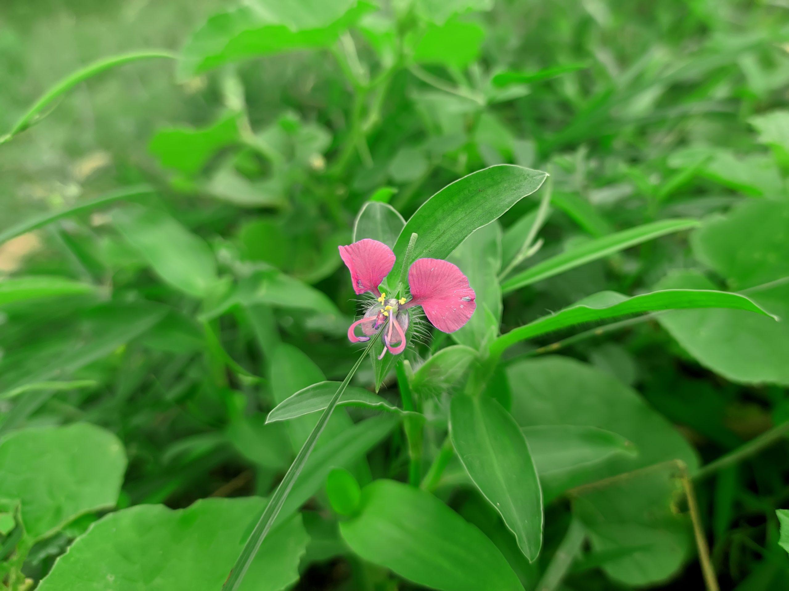 Jungle Pink Flower