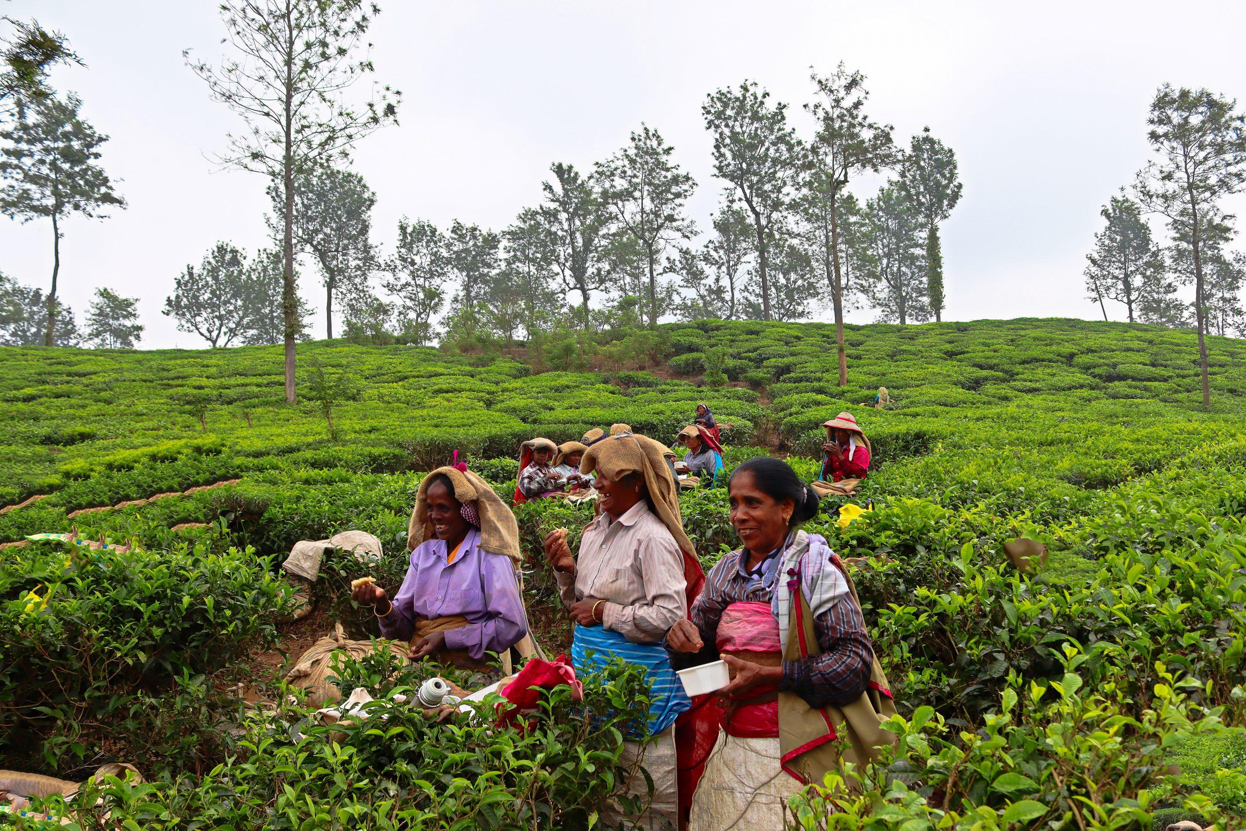Tea capital of India