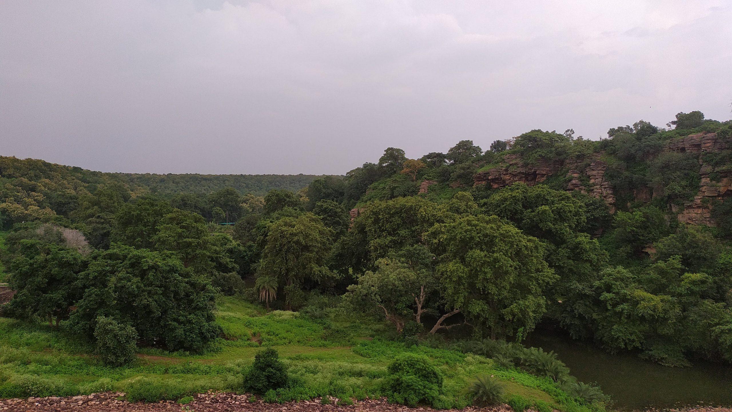 Kerwa Forest
