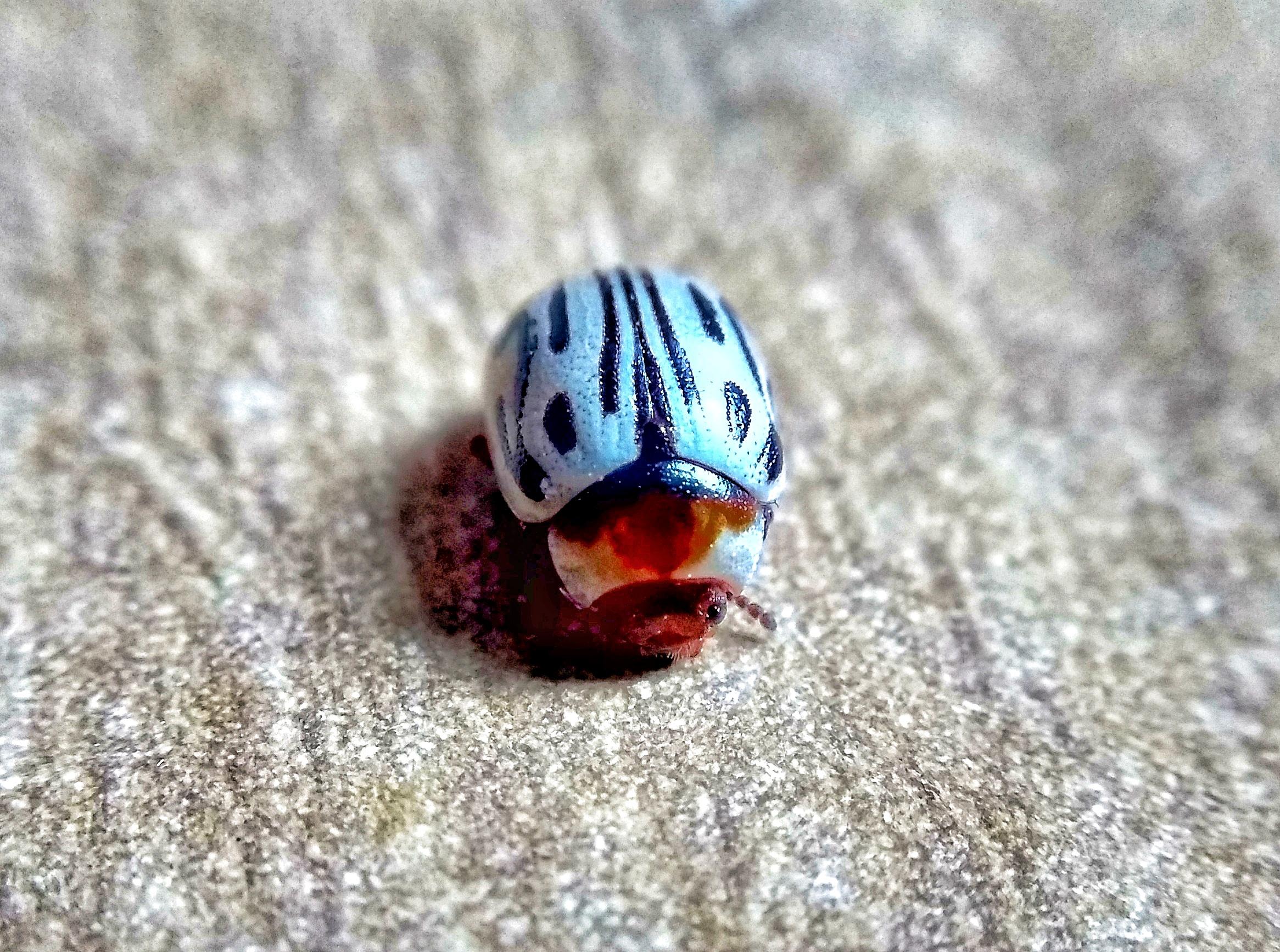 Lady Bug on focus