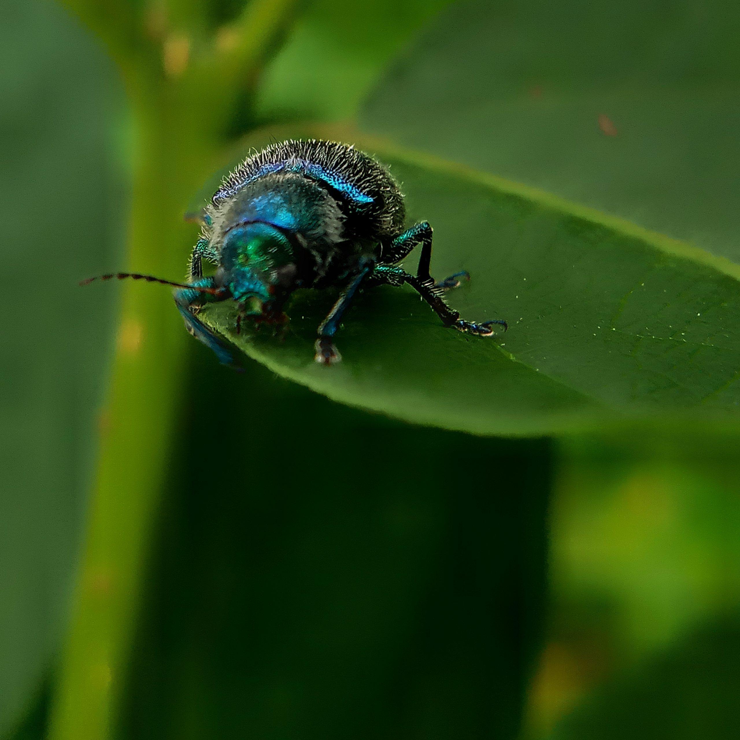 Leaf Beetle on Focus