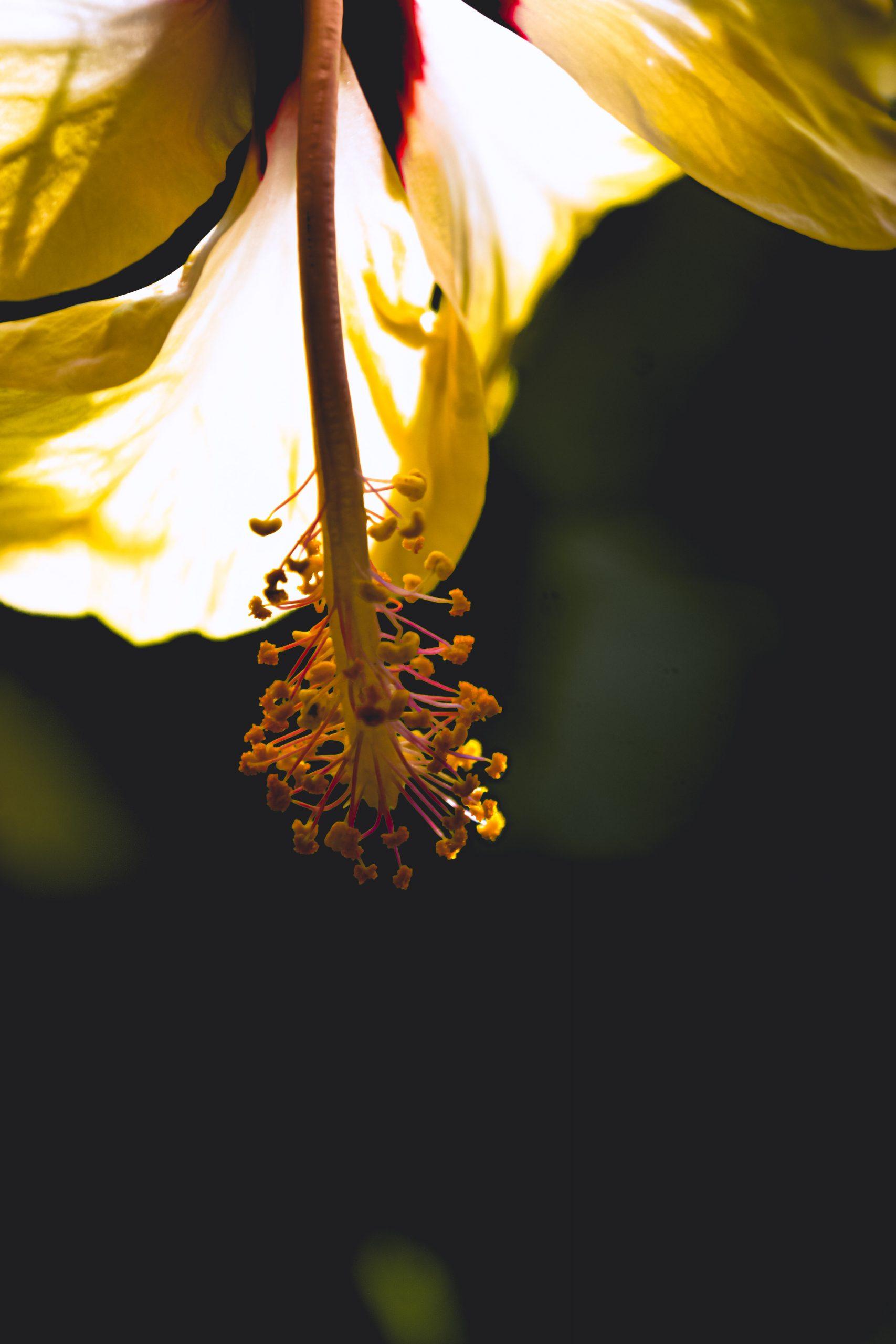 Let the sun shine hit the flower.
