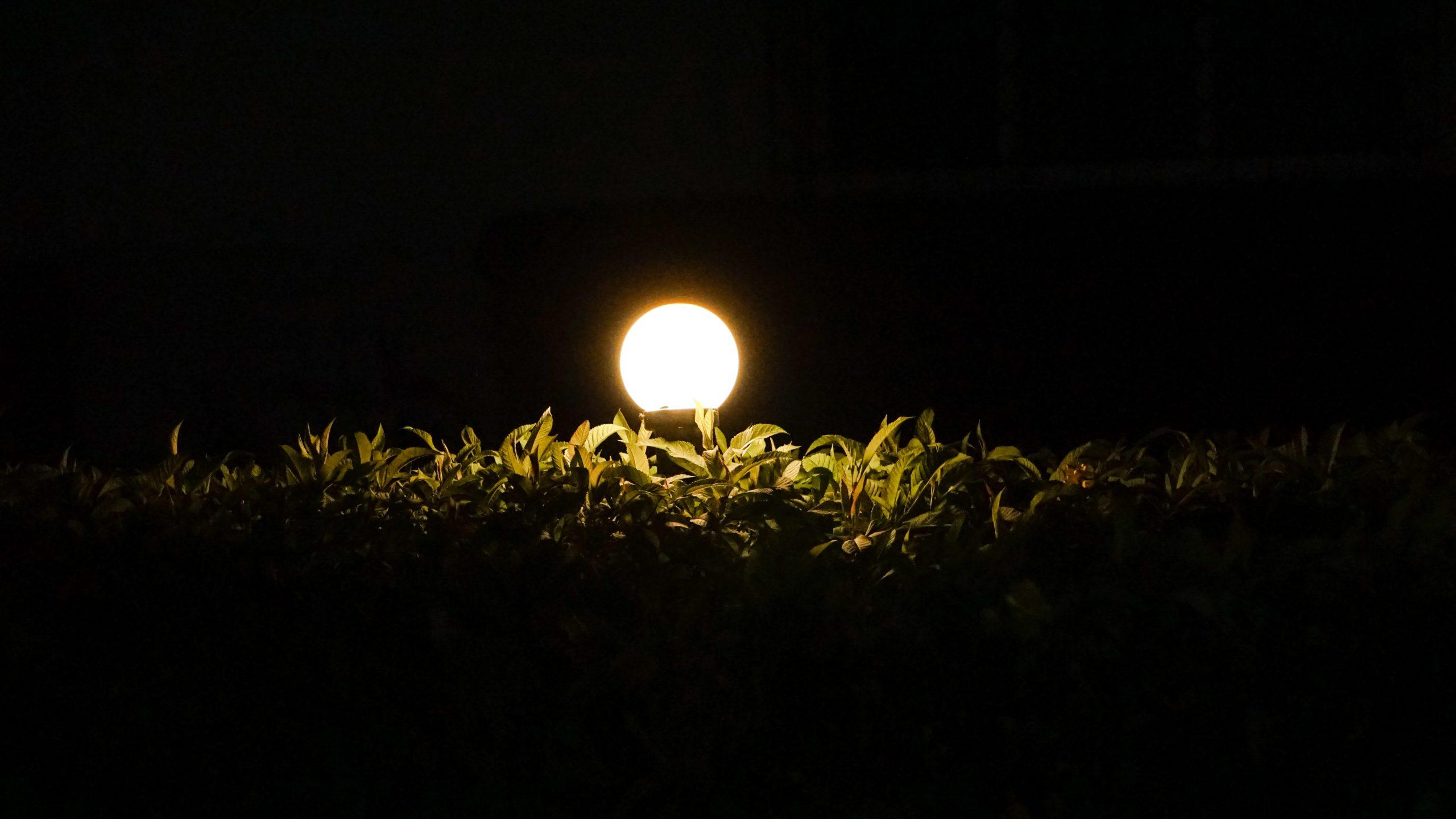 light illuminating the leaves