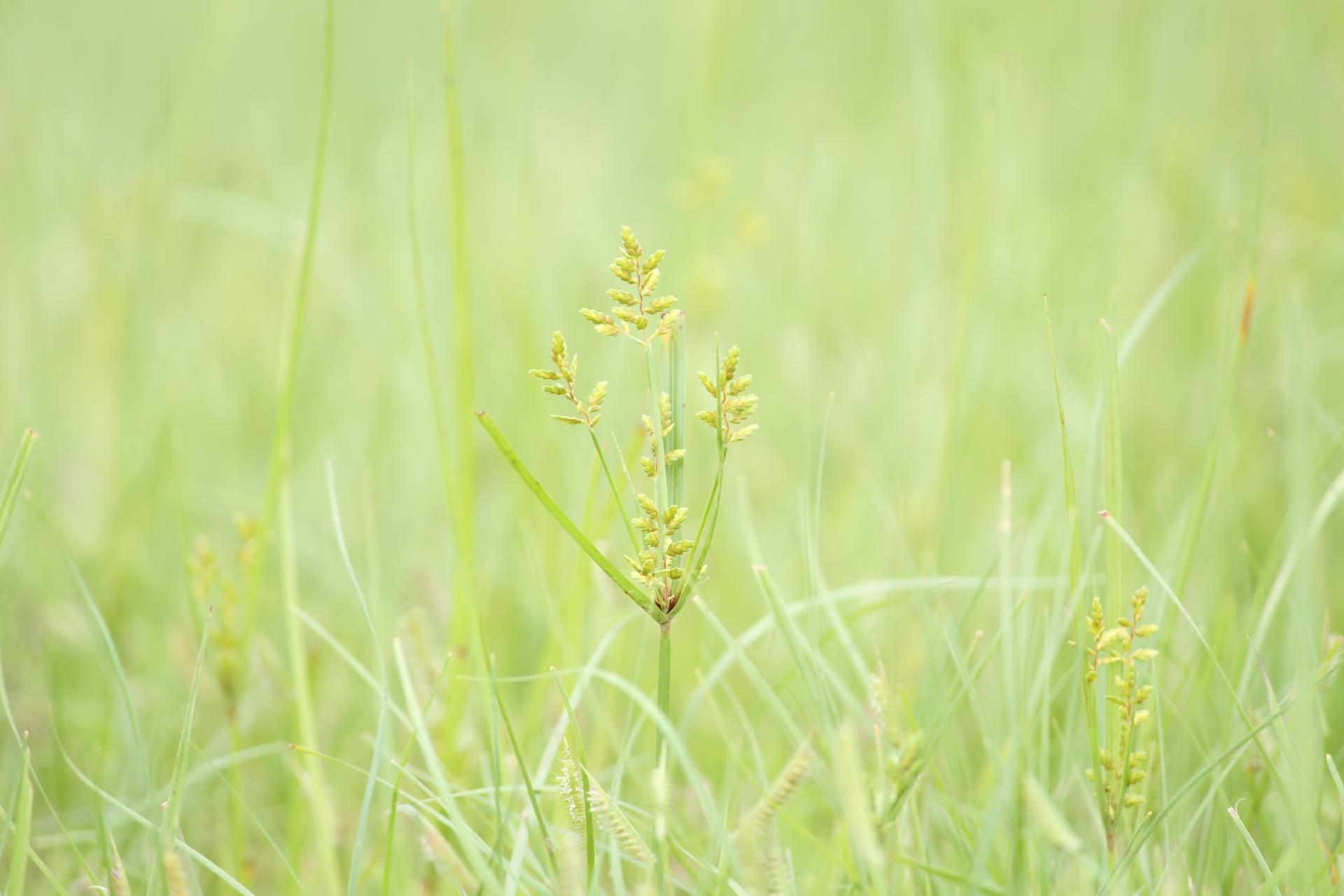 Light green grass field background