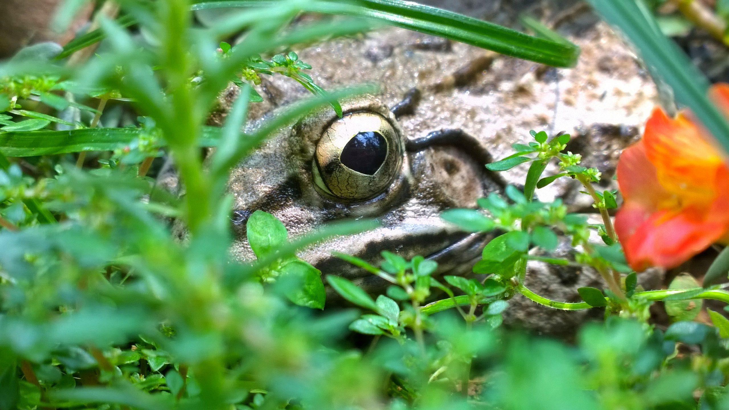 Frog surrounded with lush foliage