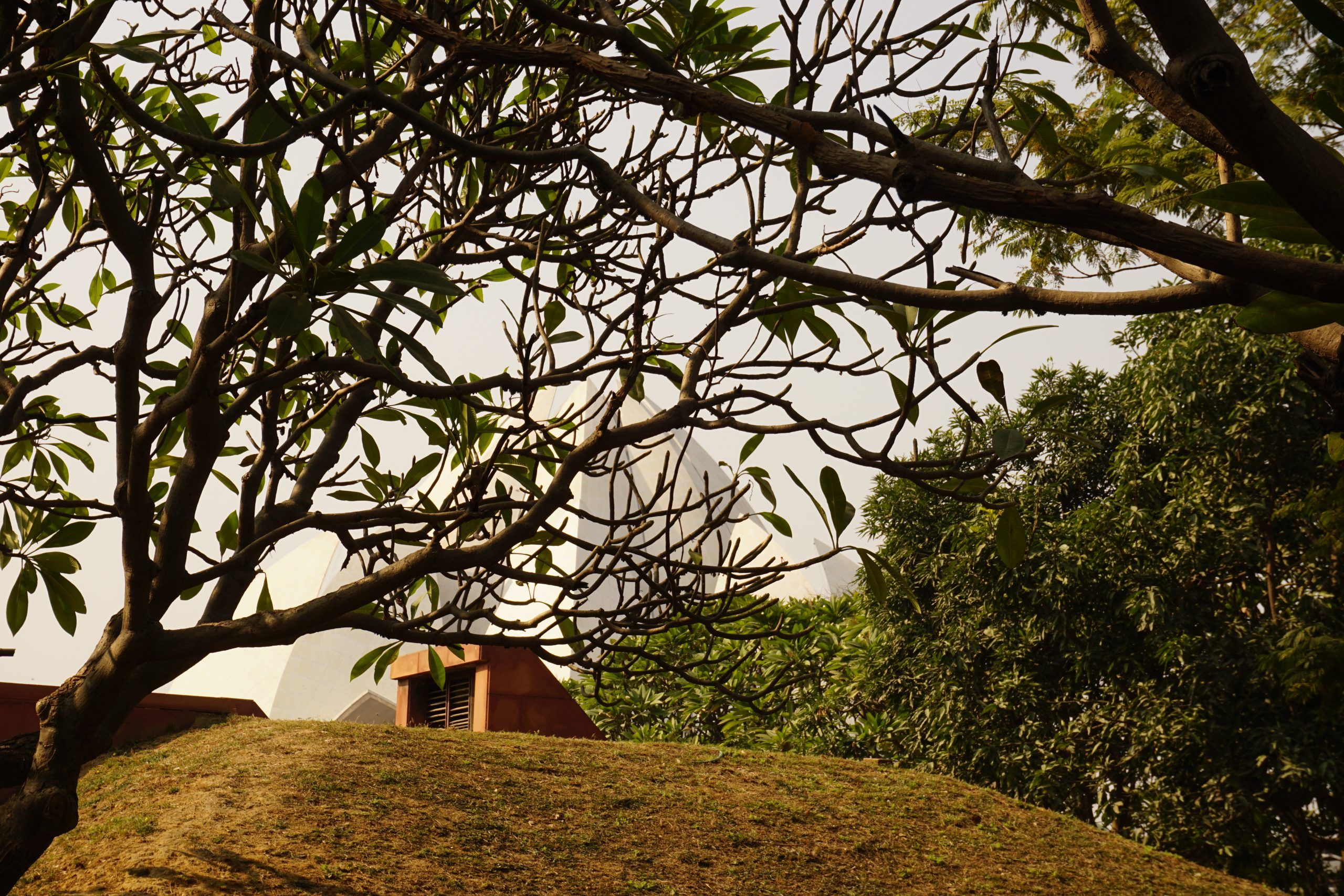 view of lotus temple from behind the tress