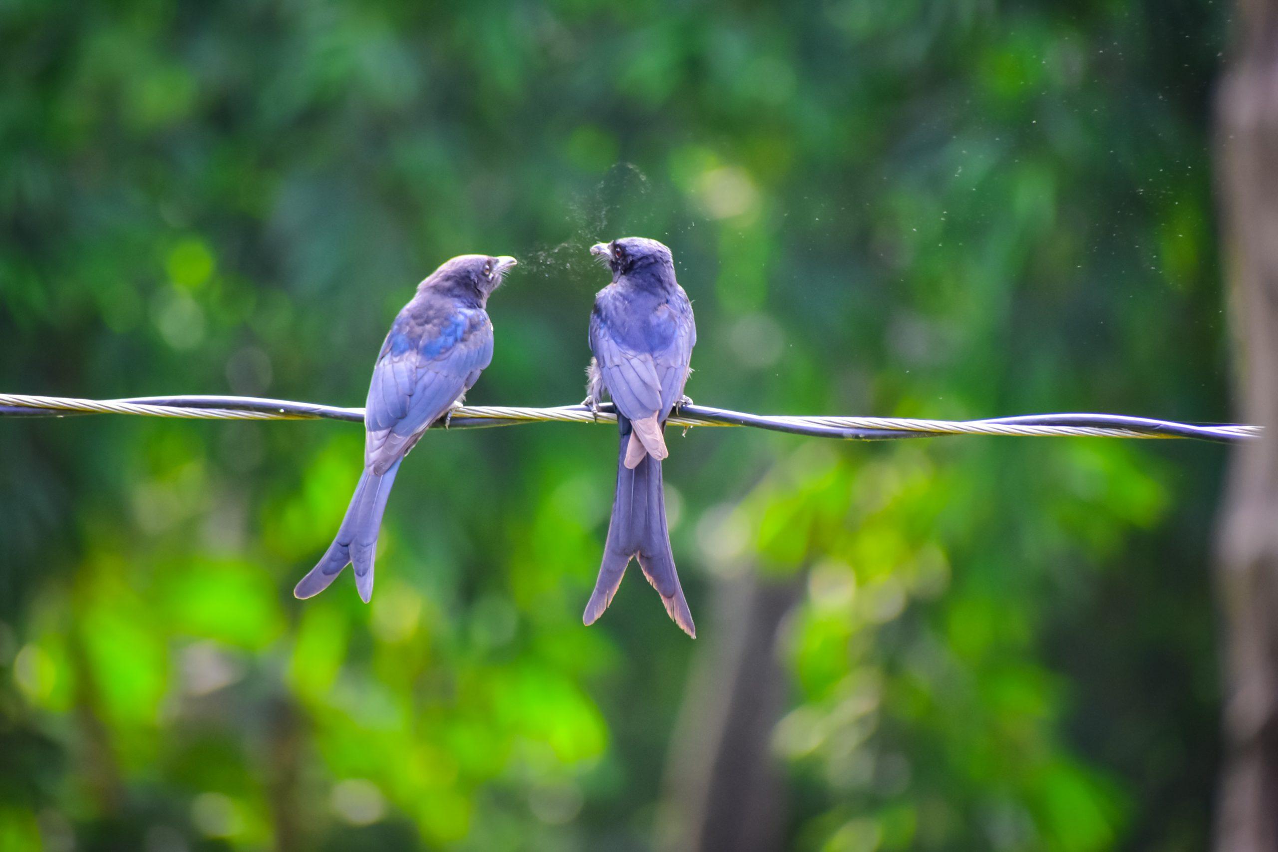 love bird couple