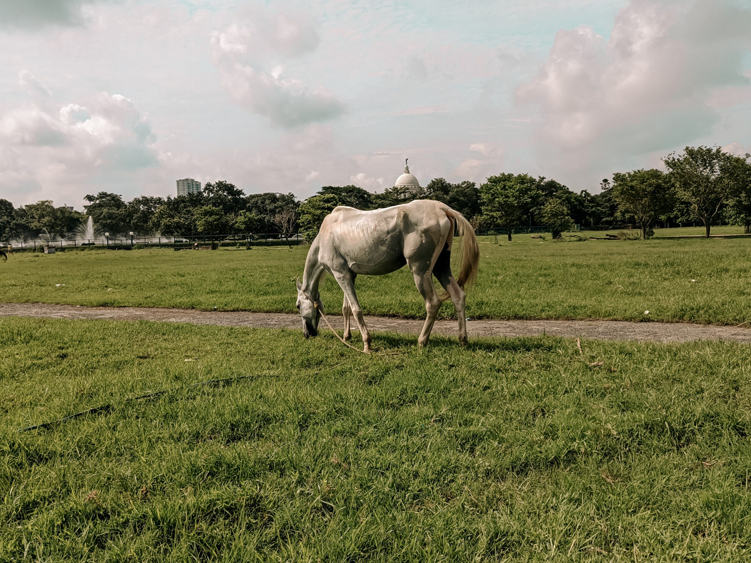 Horse grazing on a field.
