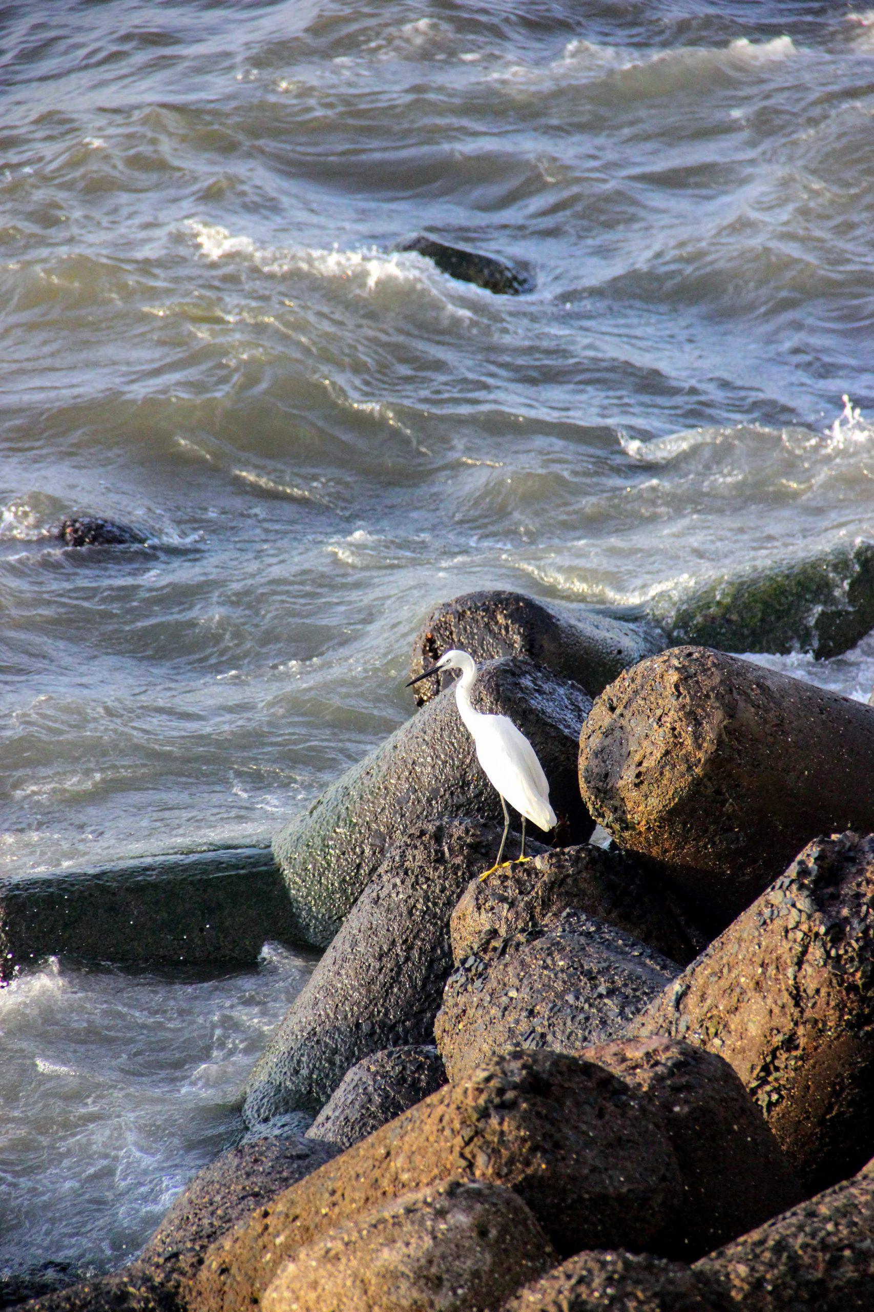 sea bird on the coast