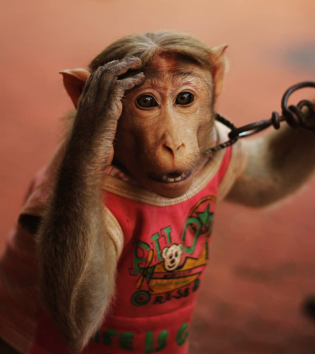 Monkey in the circus