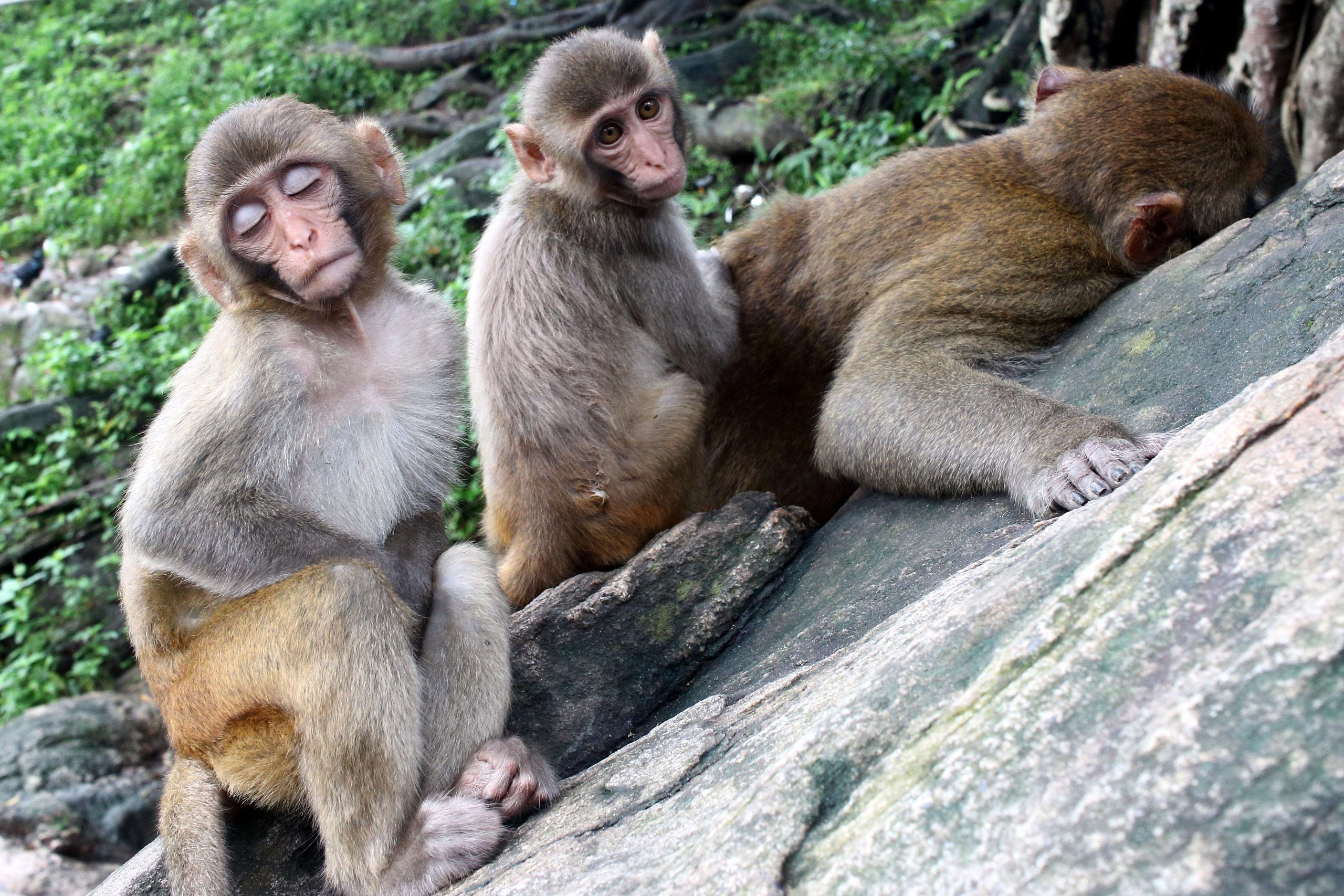 Family of a great monkies.