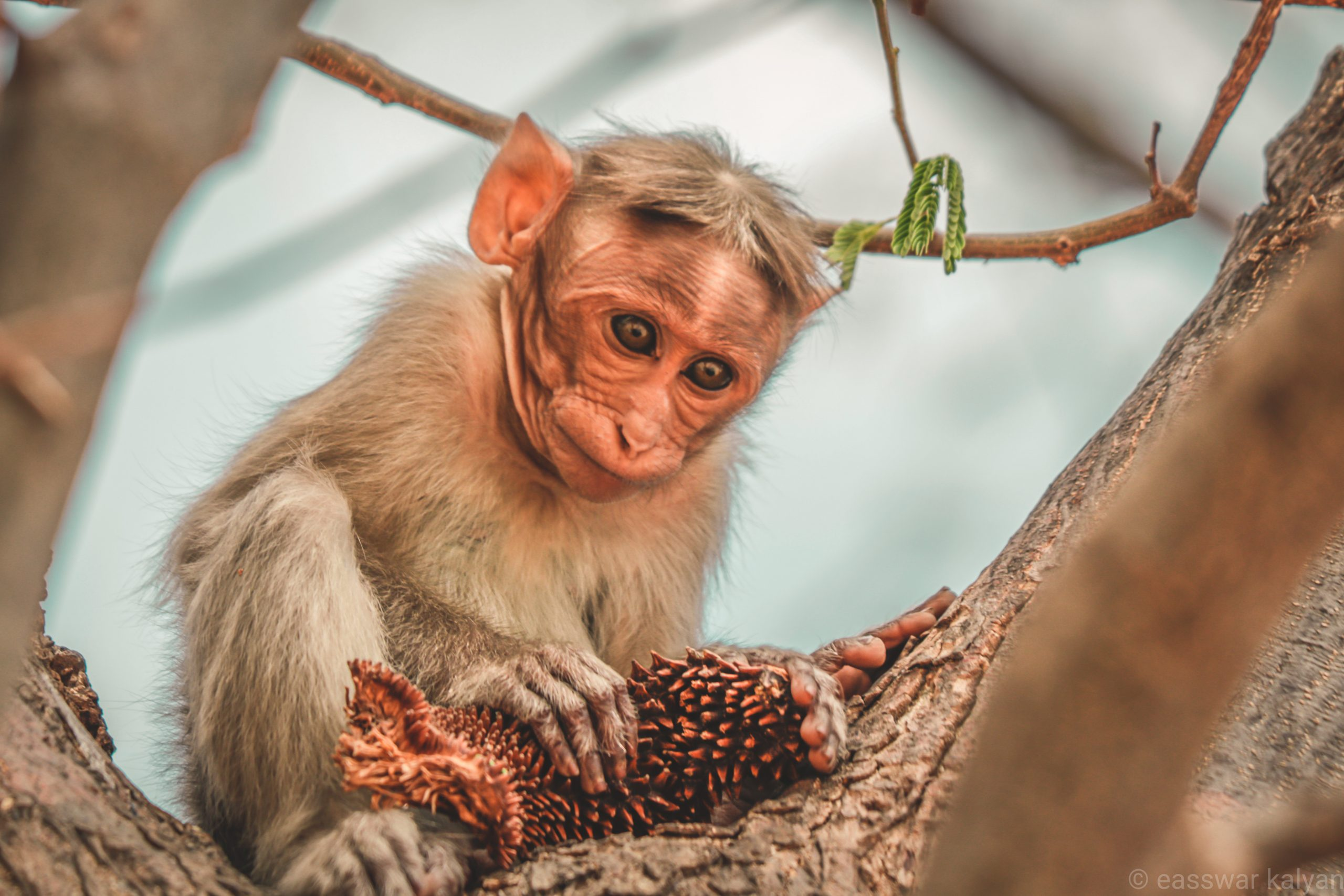 Monkey sitting on a branch.