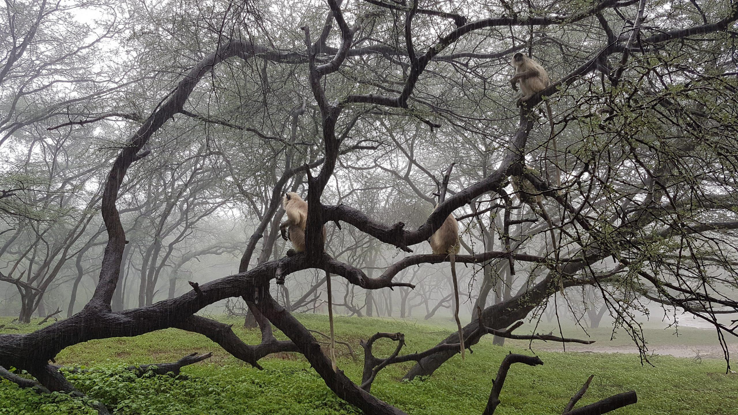 monkeys sitting on a tree