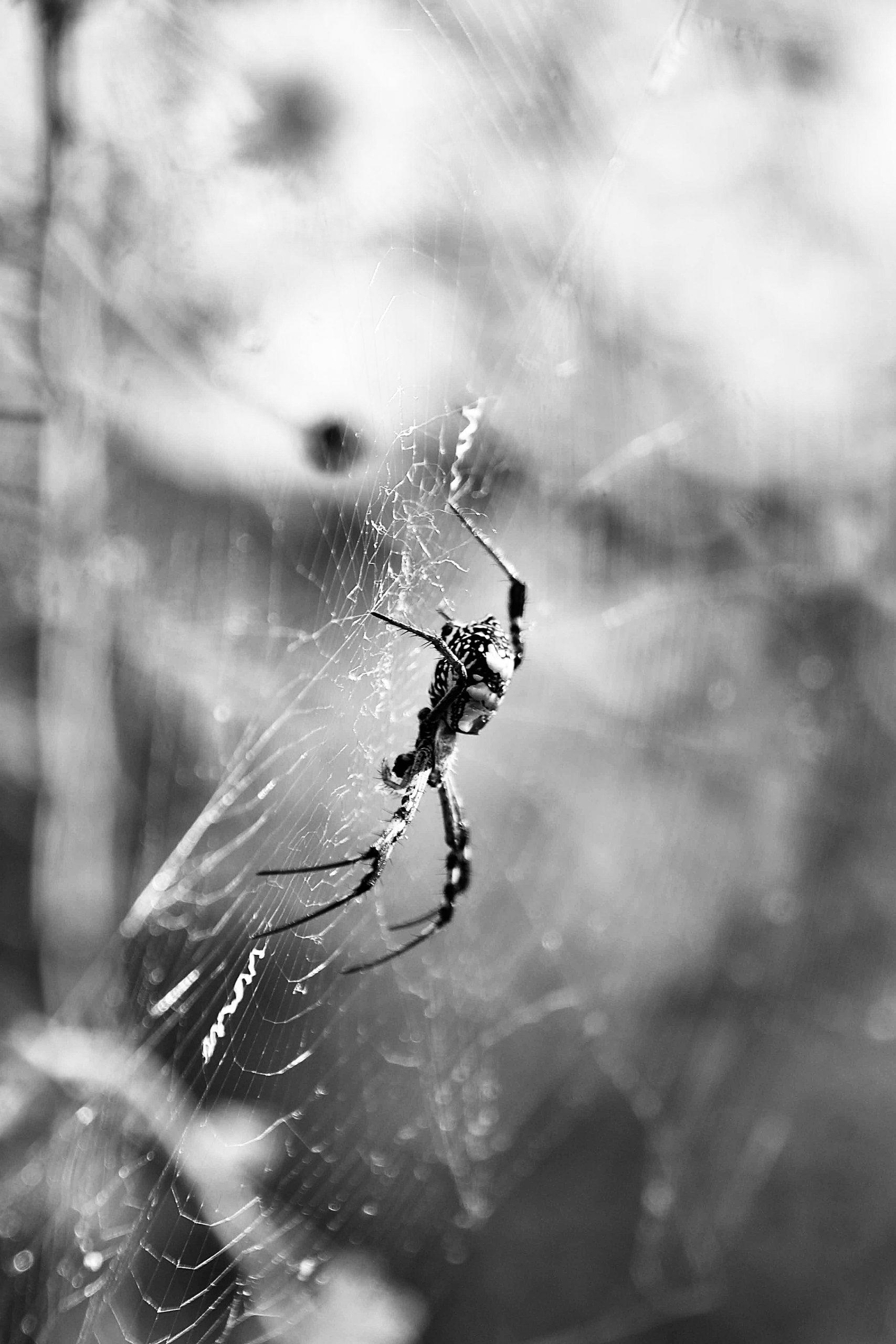 Monochromic Spider