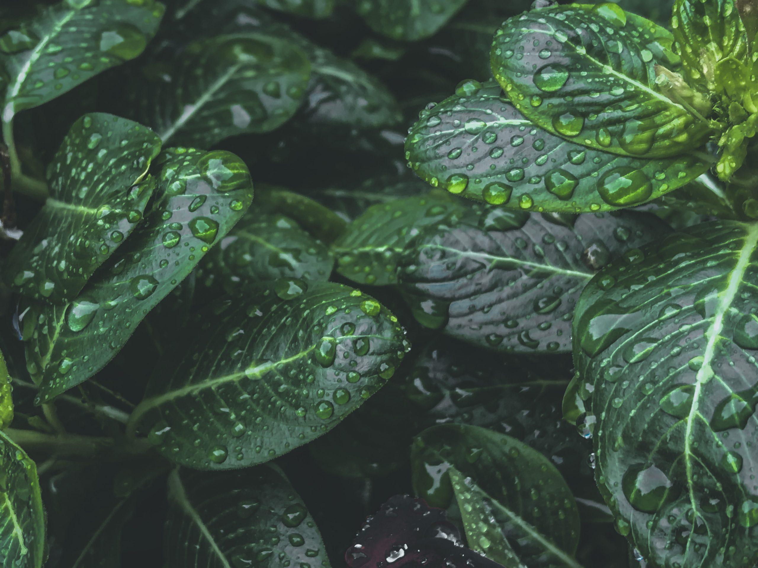 Monsoon Leaves