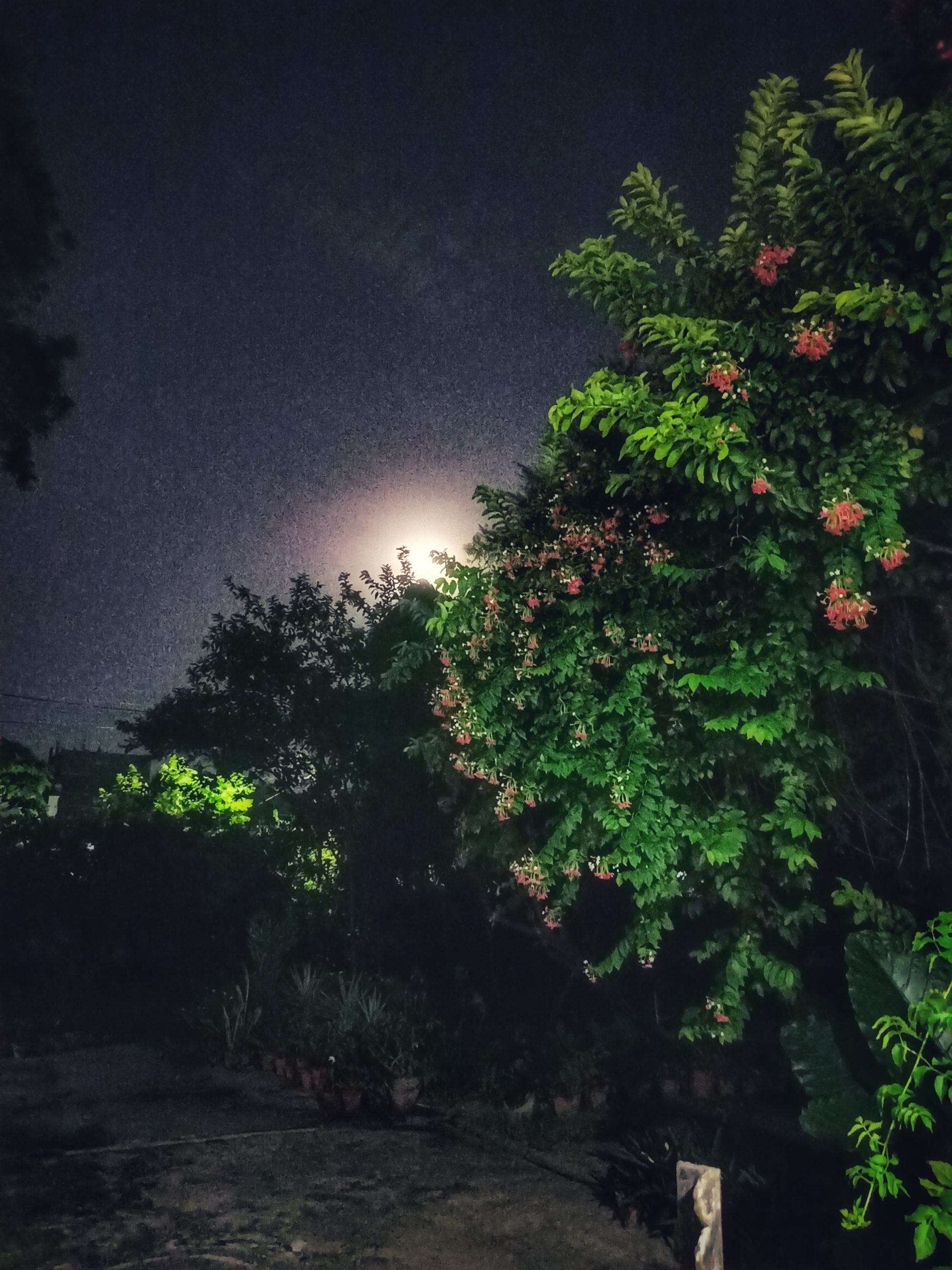 Moon hidden behind tree