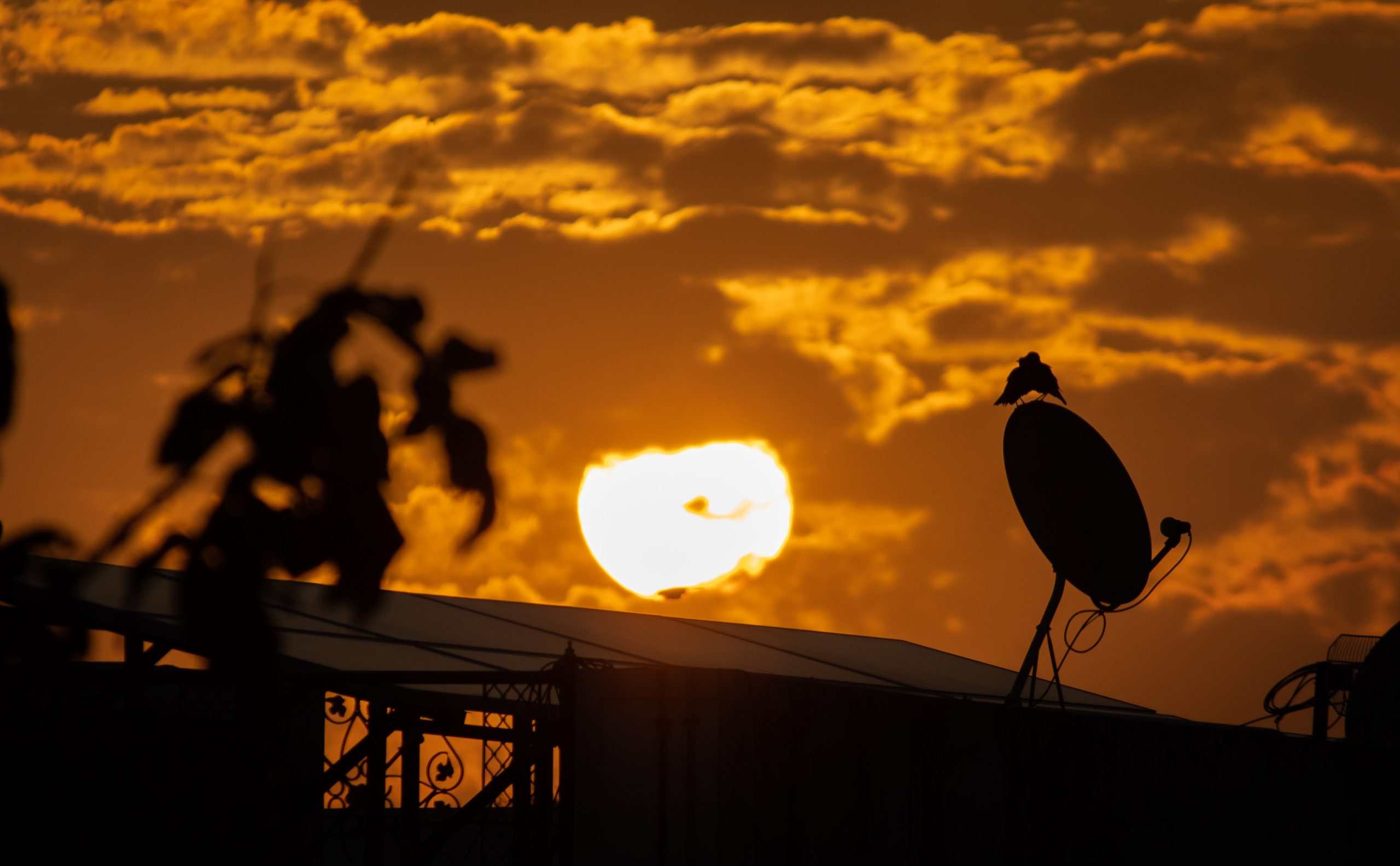 Birds perched on a satellite dish