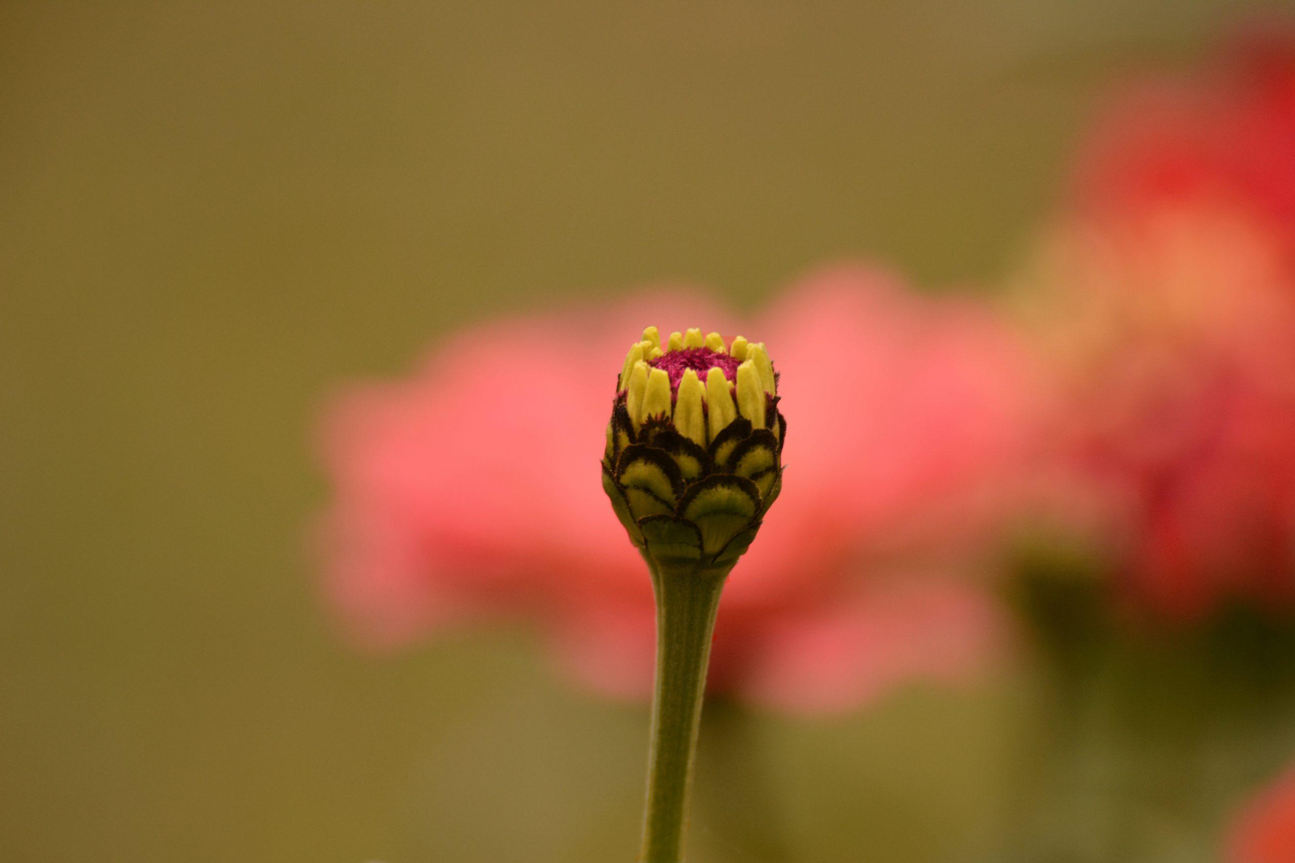 Beautiful flower bud