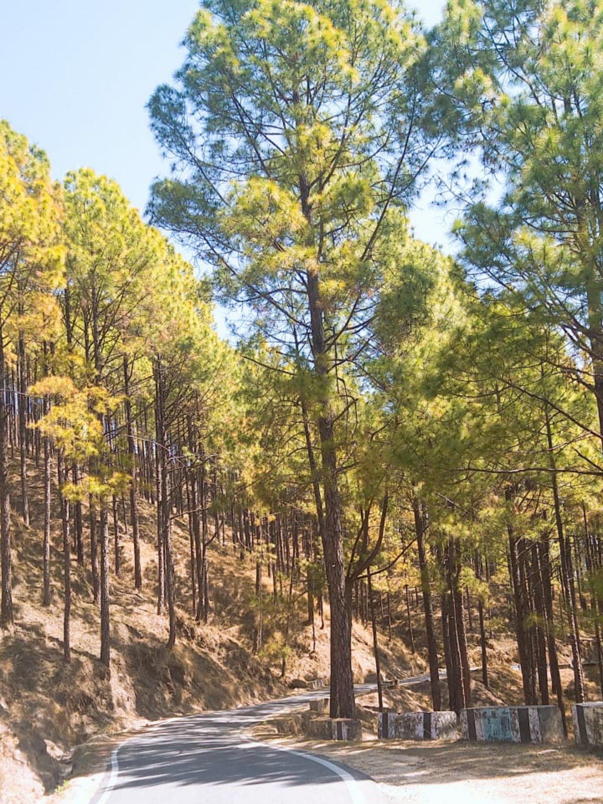 Nainital Forests