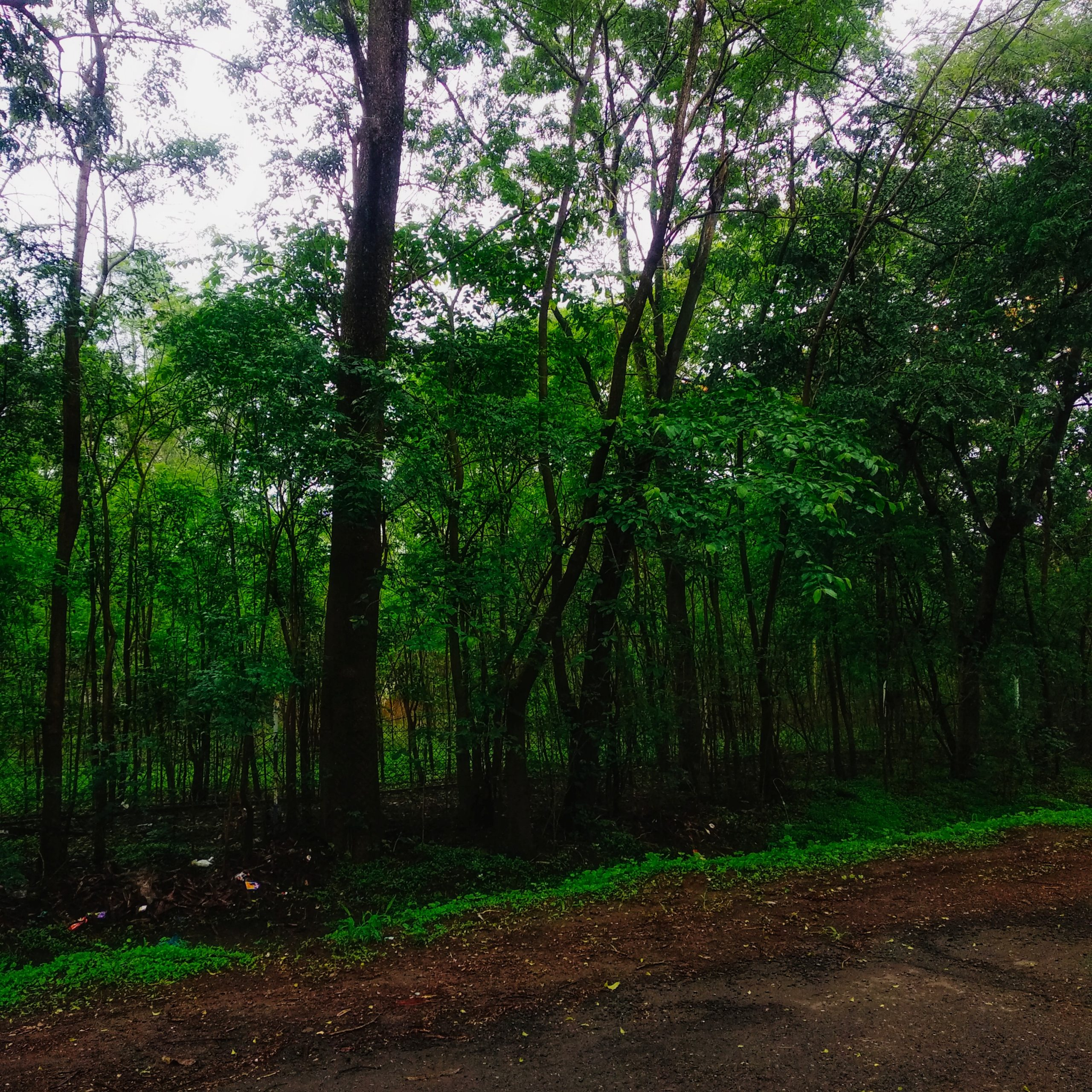 Natural Green forest