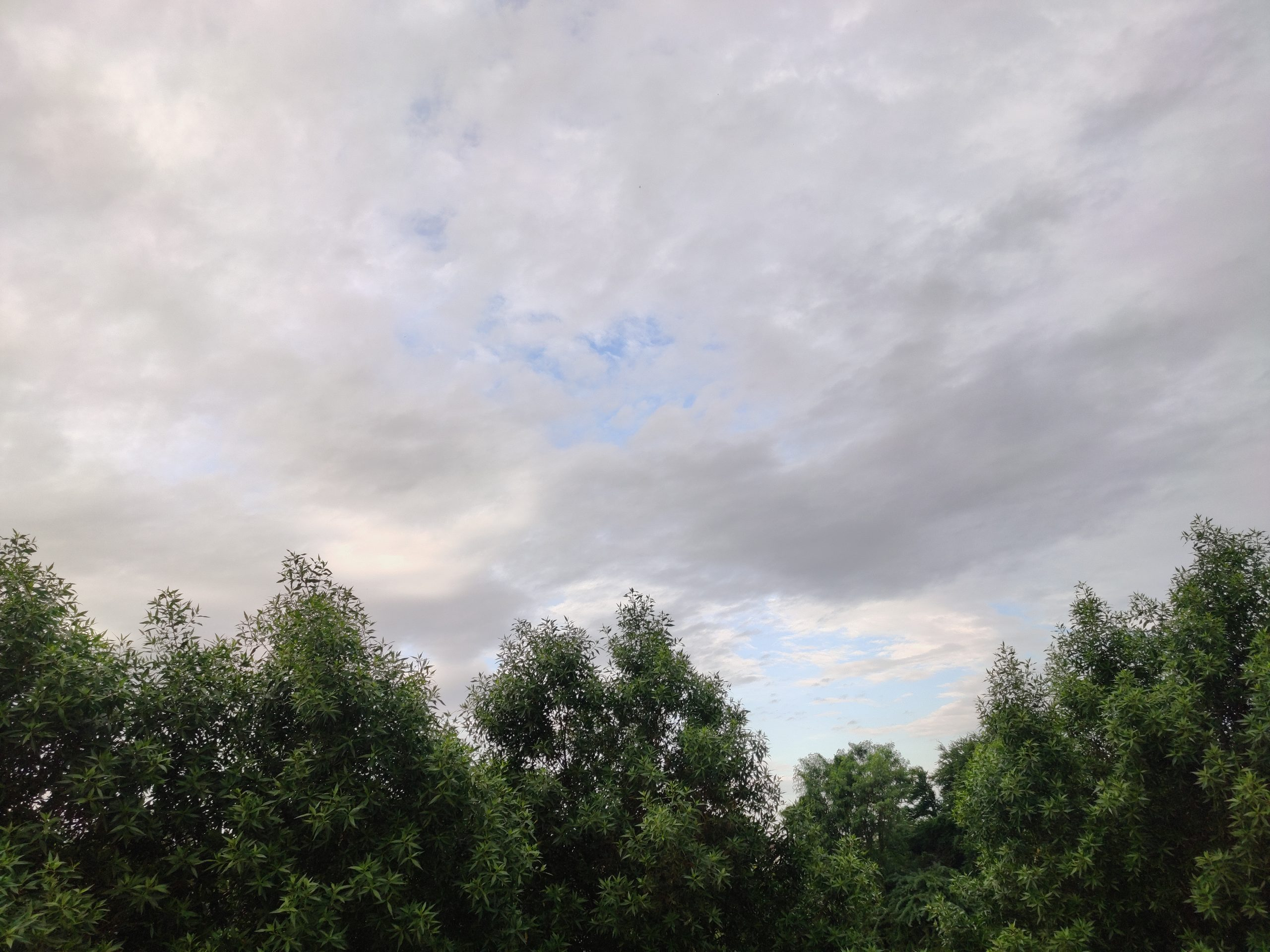 Cloudy sky portraying greenery.